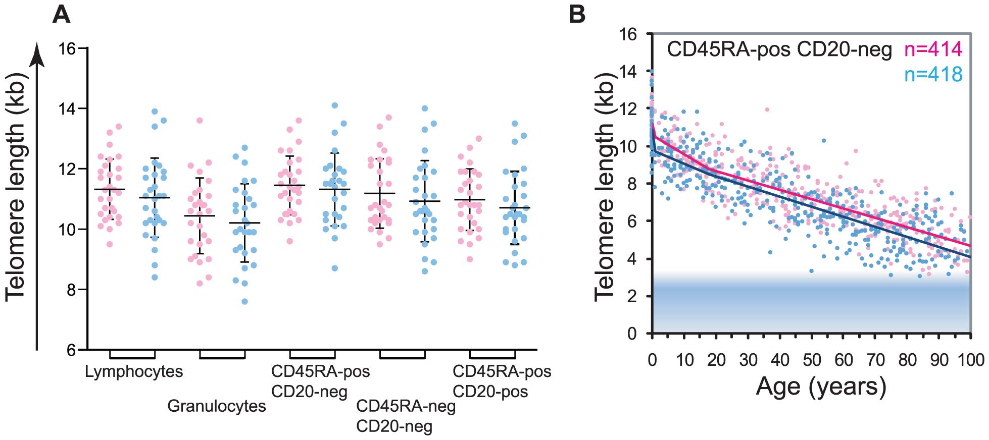 Gender differences in leukocyte telomere length.