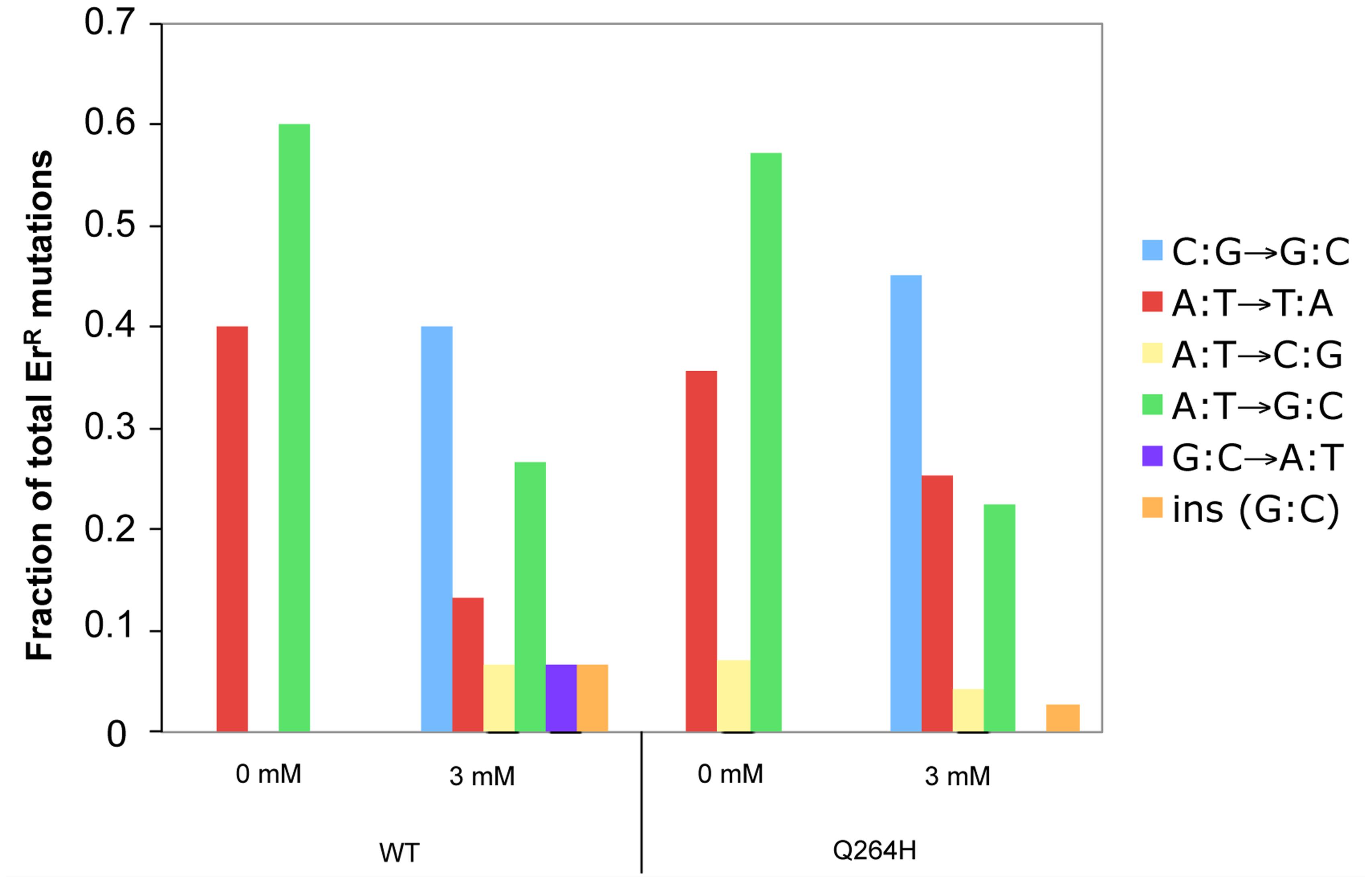 Methyl methanesulfonate exposure resulted in C:G→G:C transversions in mtDNA.