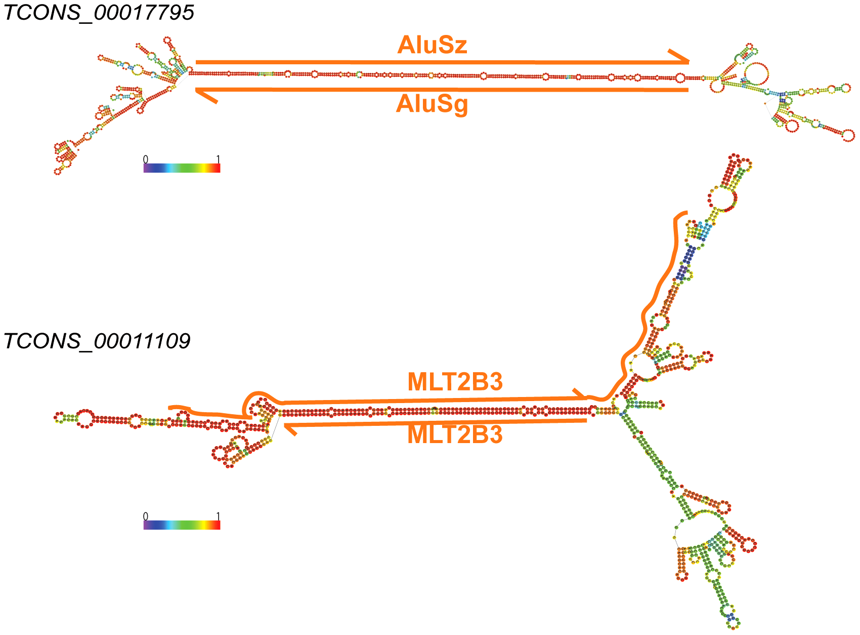 Long stem in two human lincRNAs (Cabili set) formed by inverted TEs.