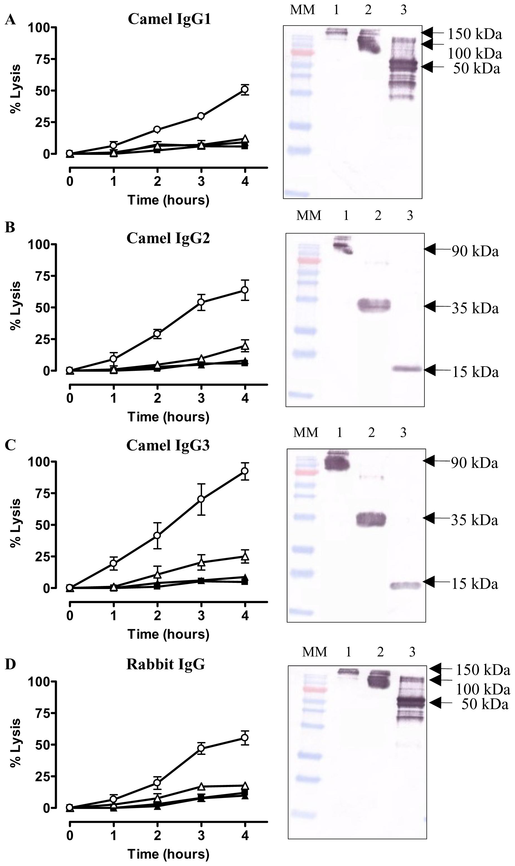 <i>In vitro</i> trypanolytic capacity of polyclonal camelid or rabbit IgGs on monomorphic AnTat1.1 parasites.