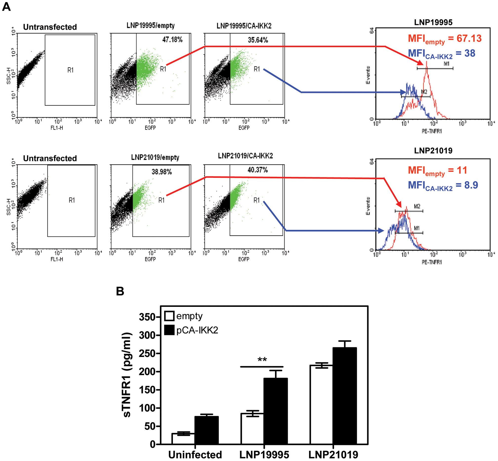 Constitutive activation of NF-κB decreased surface expression of TNFR1 and increased sTNFR1 shedding.