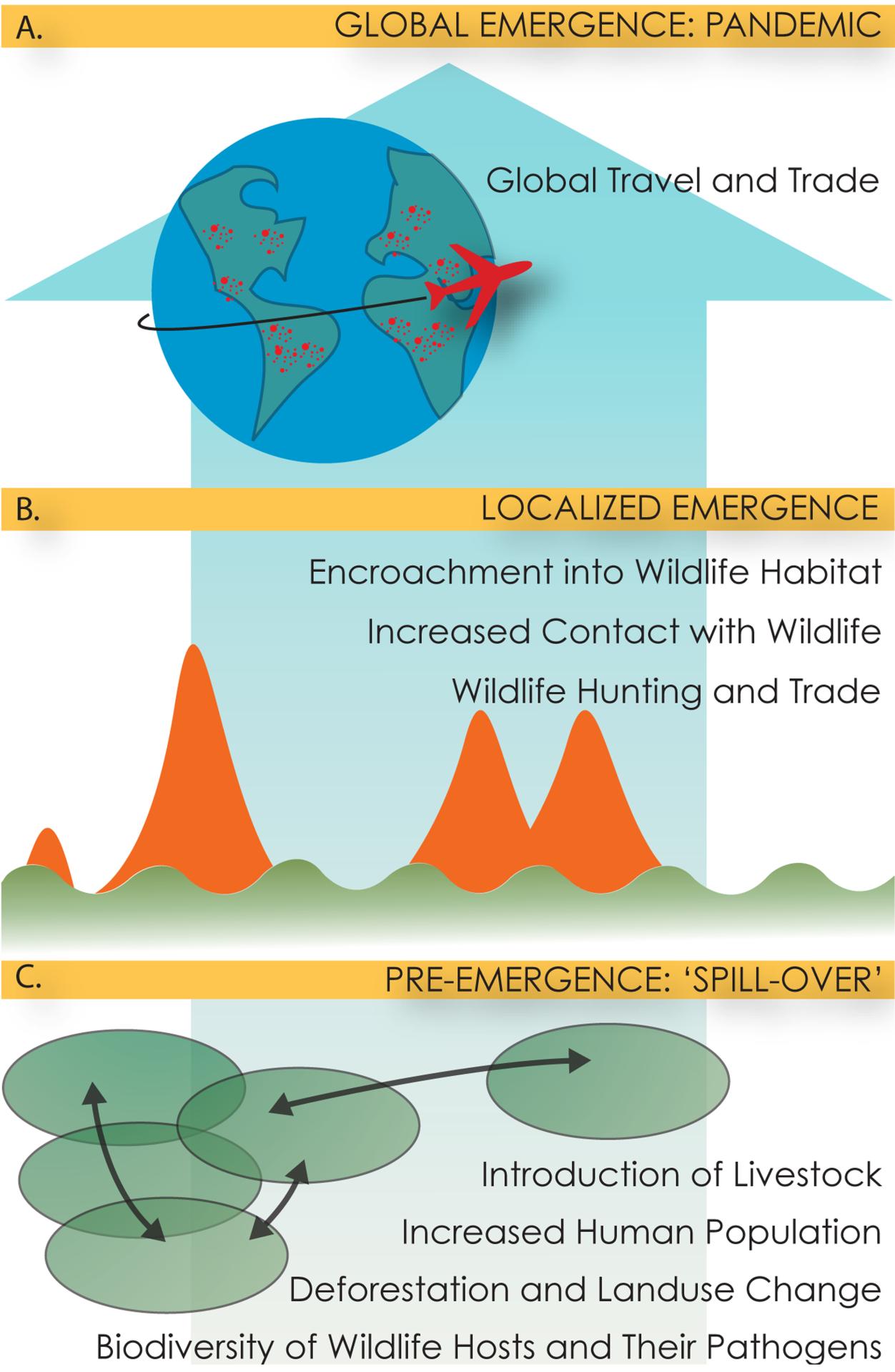 Figurative description of the multi-scale, multi-step process of pandemic emergence.