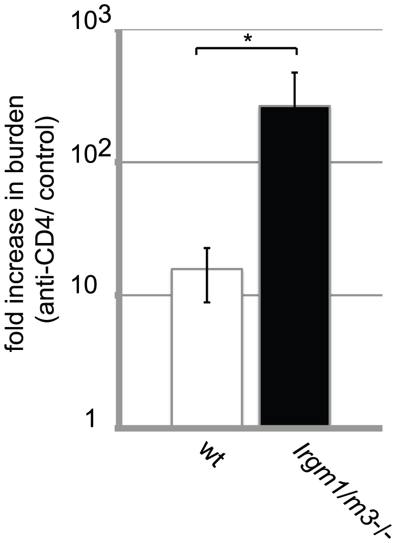 Dependency on the CD4<sup>+</sup> T cell response for clearing intrauterine <i>C. trachomatis</i> infections is increased in <i>Irgm1/m3</i><sup>(-/-)</sup> mice.