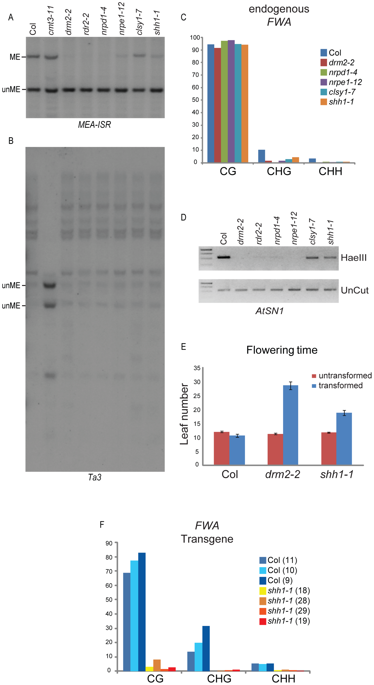 Characterization of methylation defects in the <i>shh1</i> mutant.