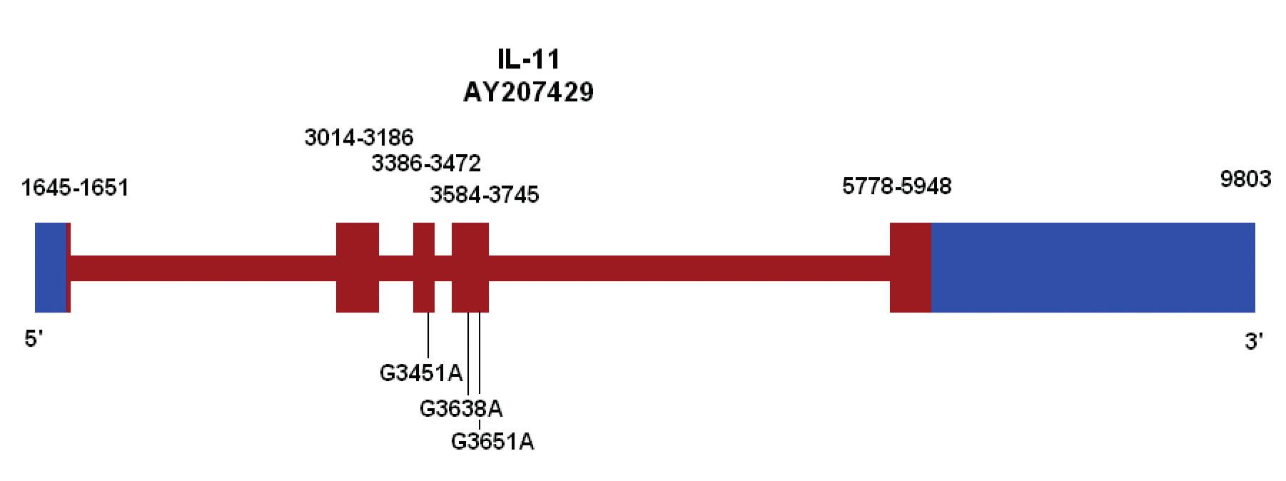 Ideogram genu pro IL-11 s vyznačením variant v exonech