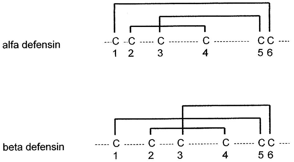 Porovnání disulfidických vazeb u alfa a beta defensinů.