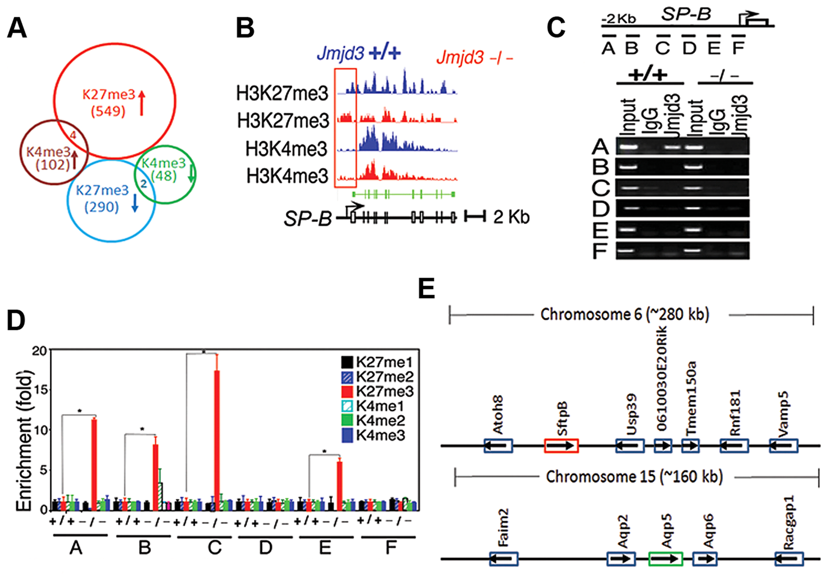 <i>Jmjd</i>3 ablation affects global histone methylation in lung tissues and methylation status of the promoter regions of target genes.