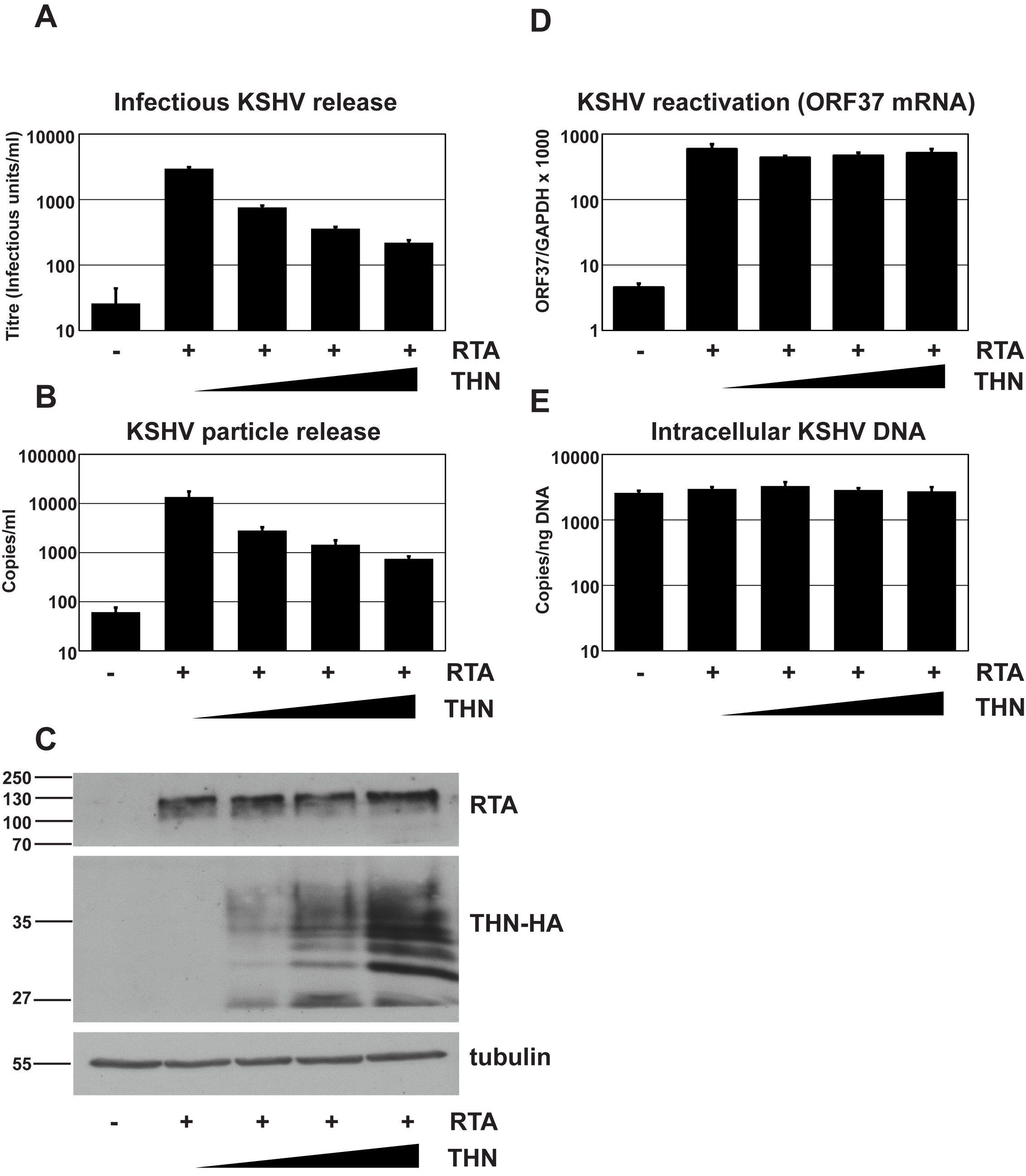 Over-expression of human tetherin restricts KSHV particle release.
