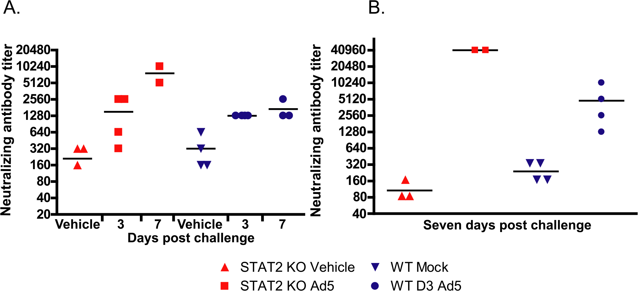 After Ad5 infection, the humoral immune response is accentuated in the STAT2 KO animals.