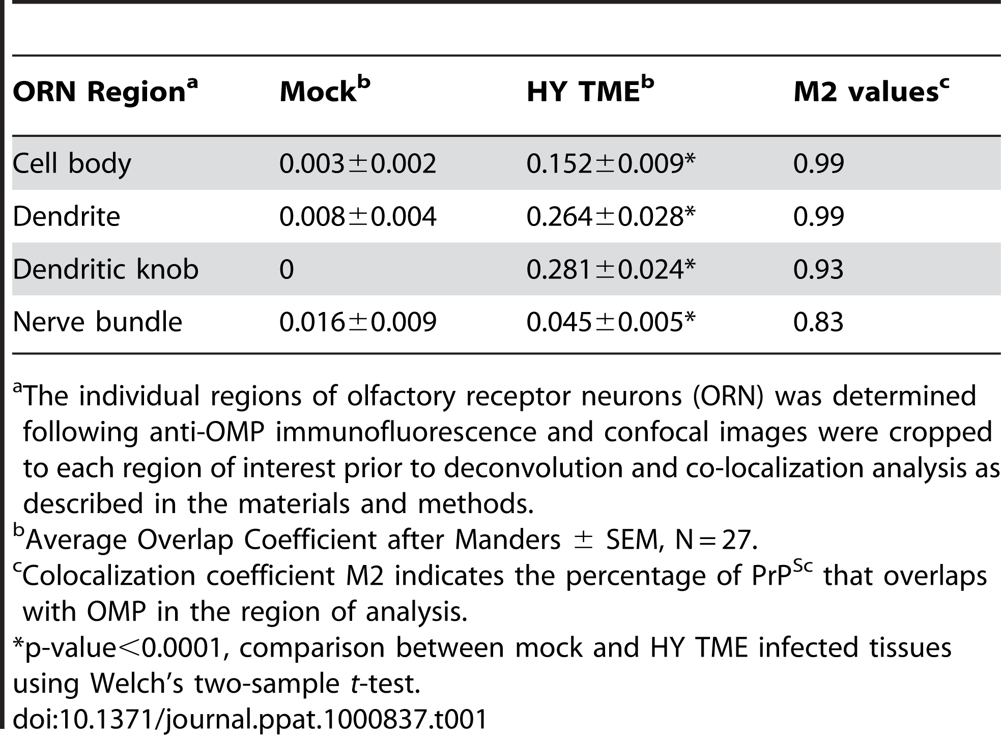 Colocalization of PrP<sup>Sc</sup> and olfactory marker protein in olfactory receptor neurons.