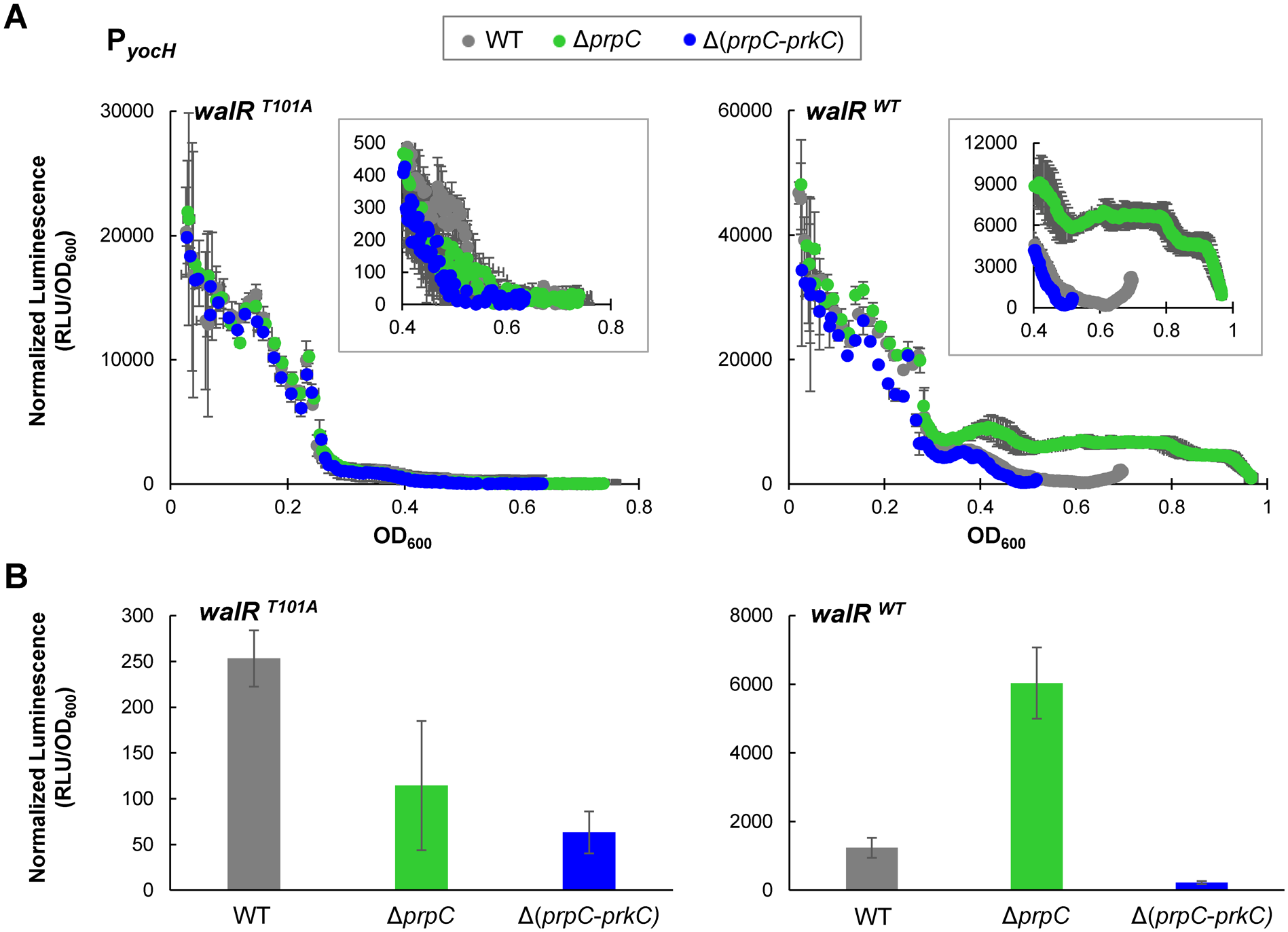 <i>yocH</i> does not show PrkC-dependent activation in a WalR T101A mutant.