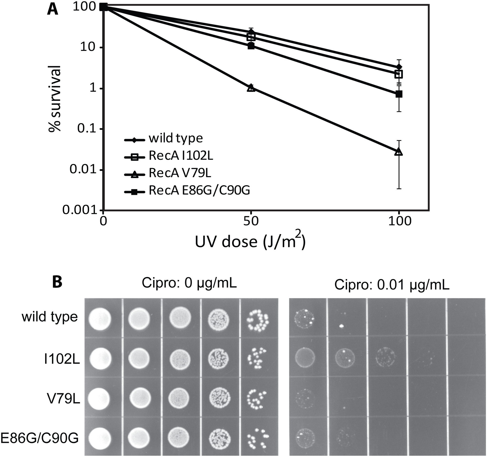 The effects of RecA variants on UV radiation and ciprofloxacin sensitivity.