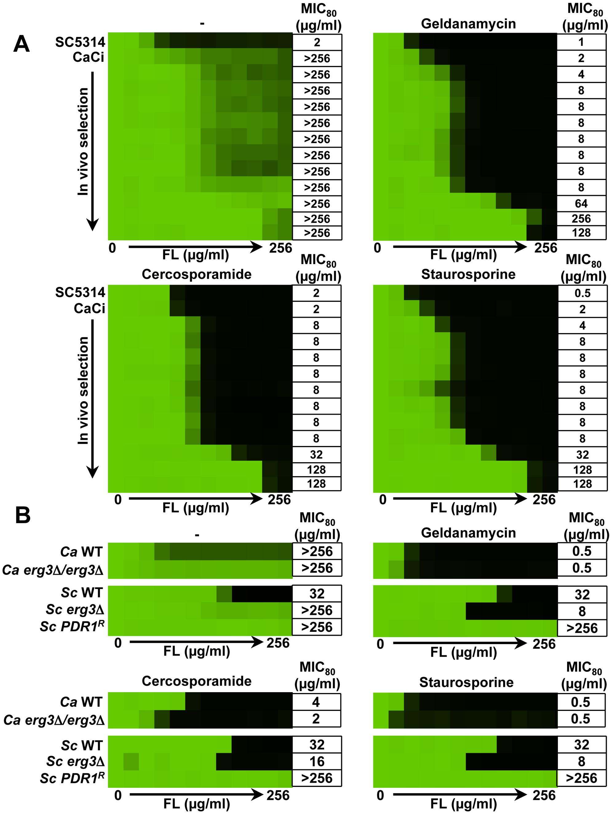 Inhibition of PKC signaling phenocopies inhibition of Hsp90 reducing azole resistance.