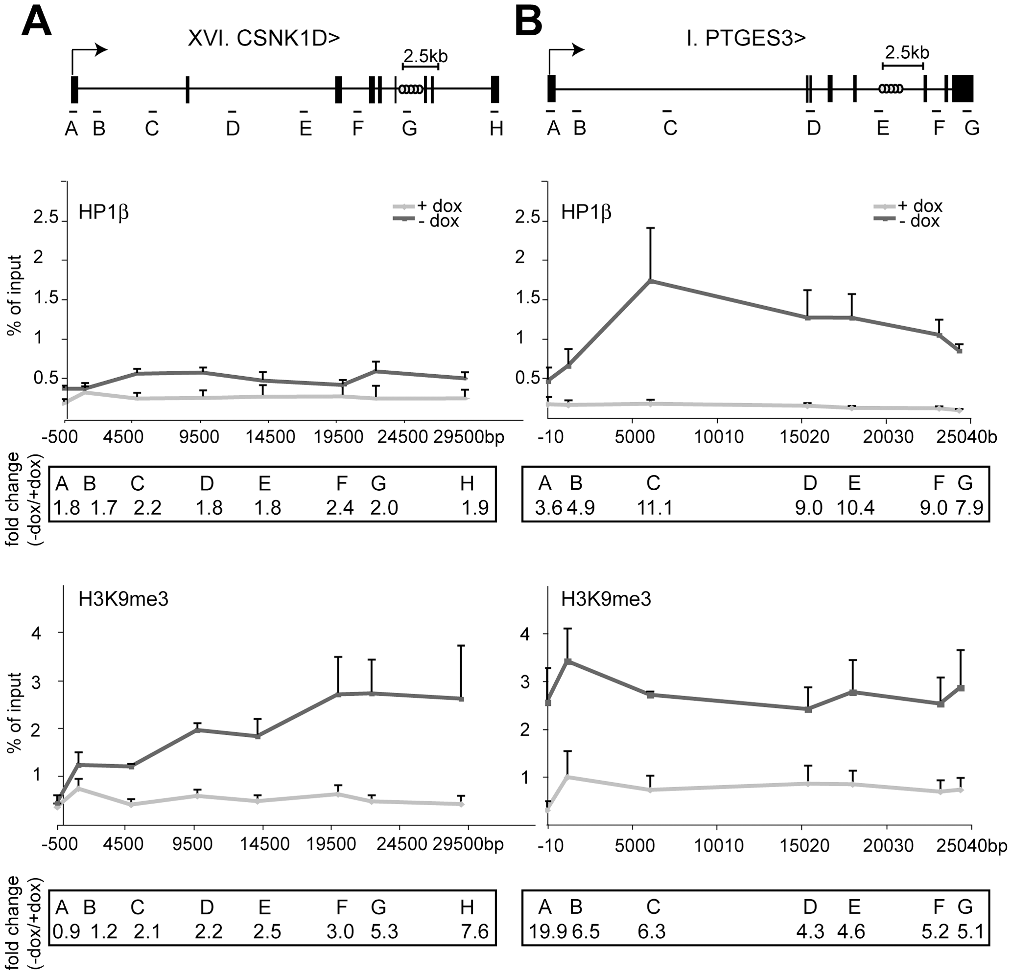 HP1β and H3K9me3 spread from the KRAB–binding site to the promoter.