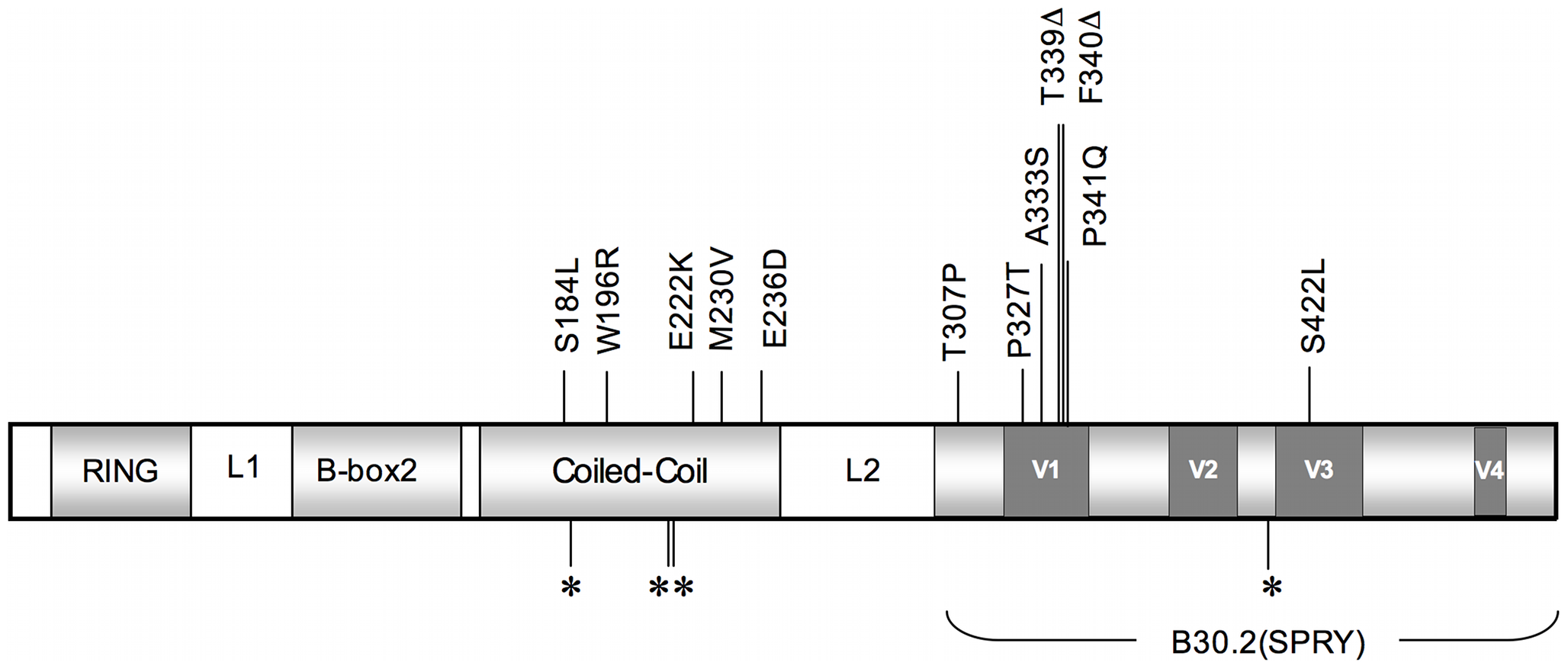 A schematic illustrating TRIM5α and its functional domains.