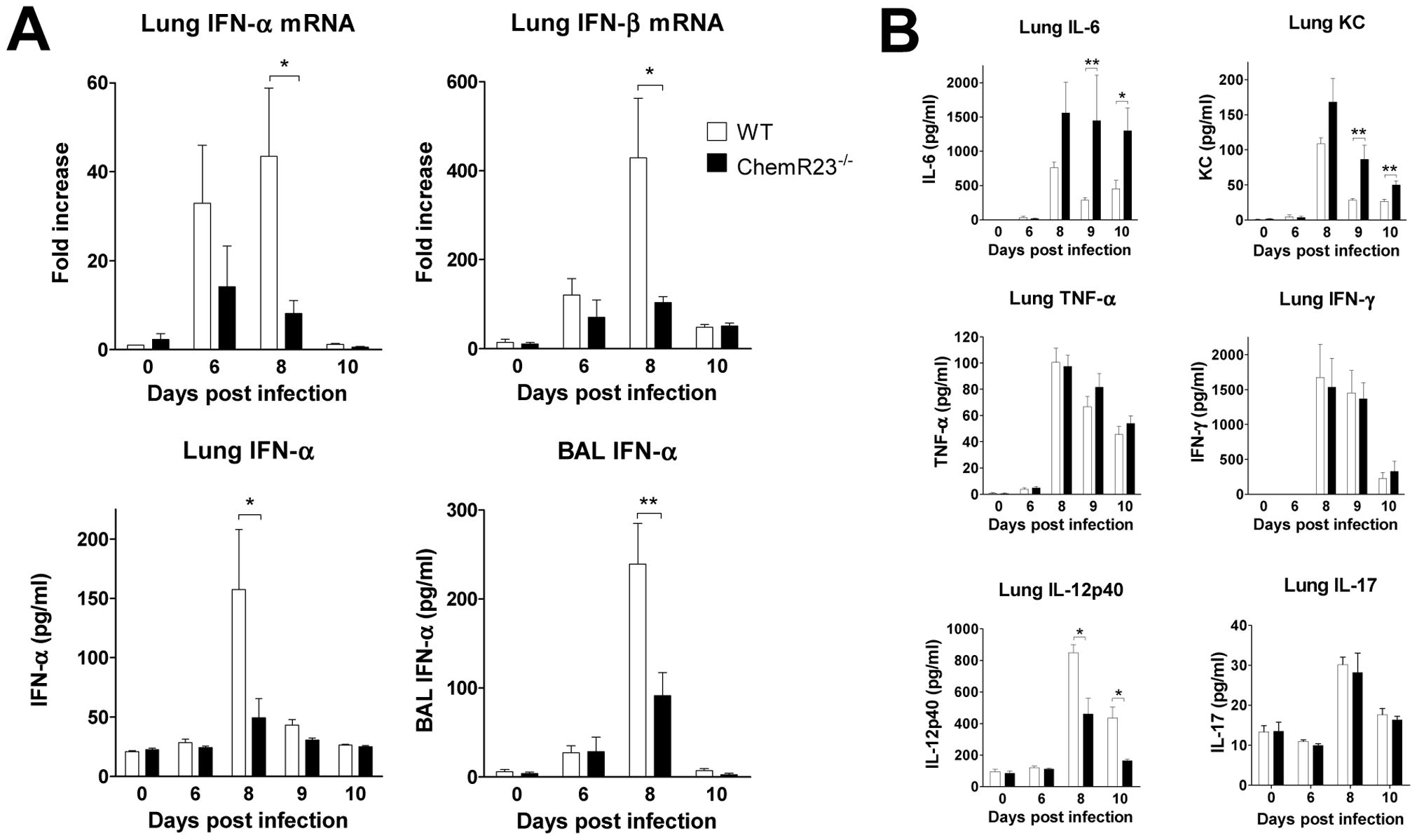 Reduced levels of type I IFNs and IL-12p40 in ChemR23<sup>−/−</sup> infected mice.