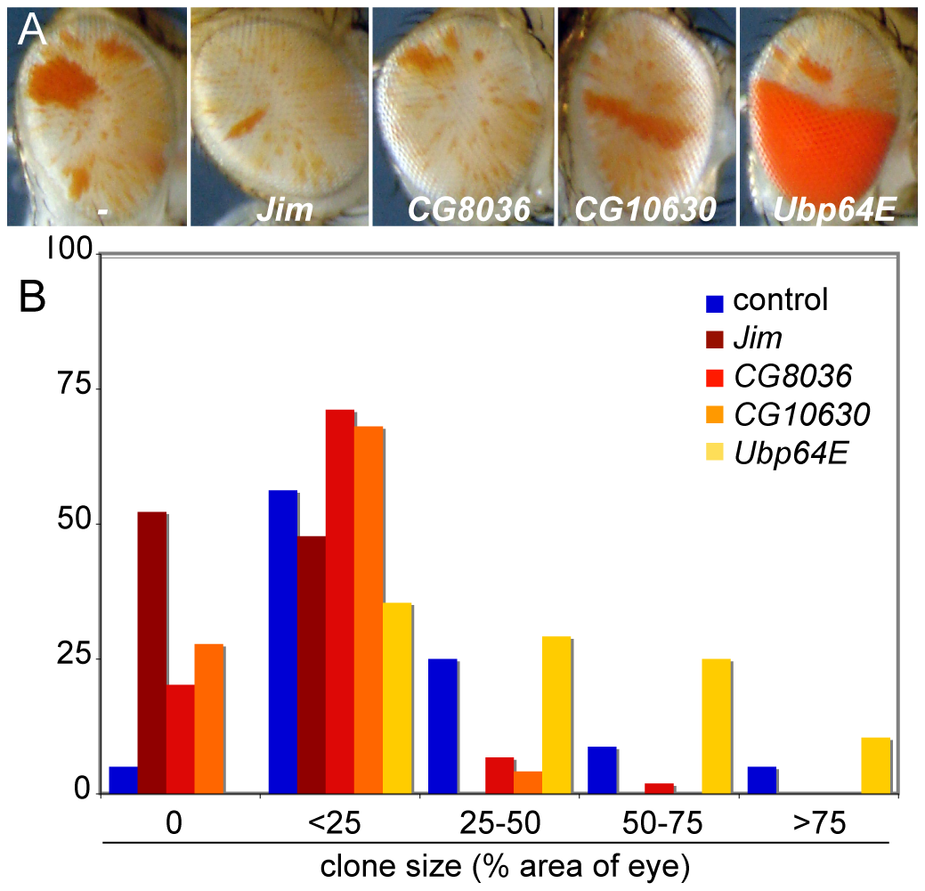 Inducible enhancers alter <i>crol</i>-mediated establishment of de-repression.
