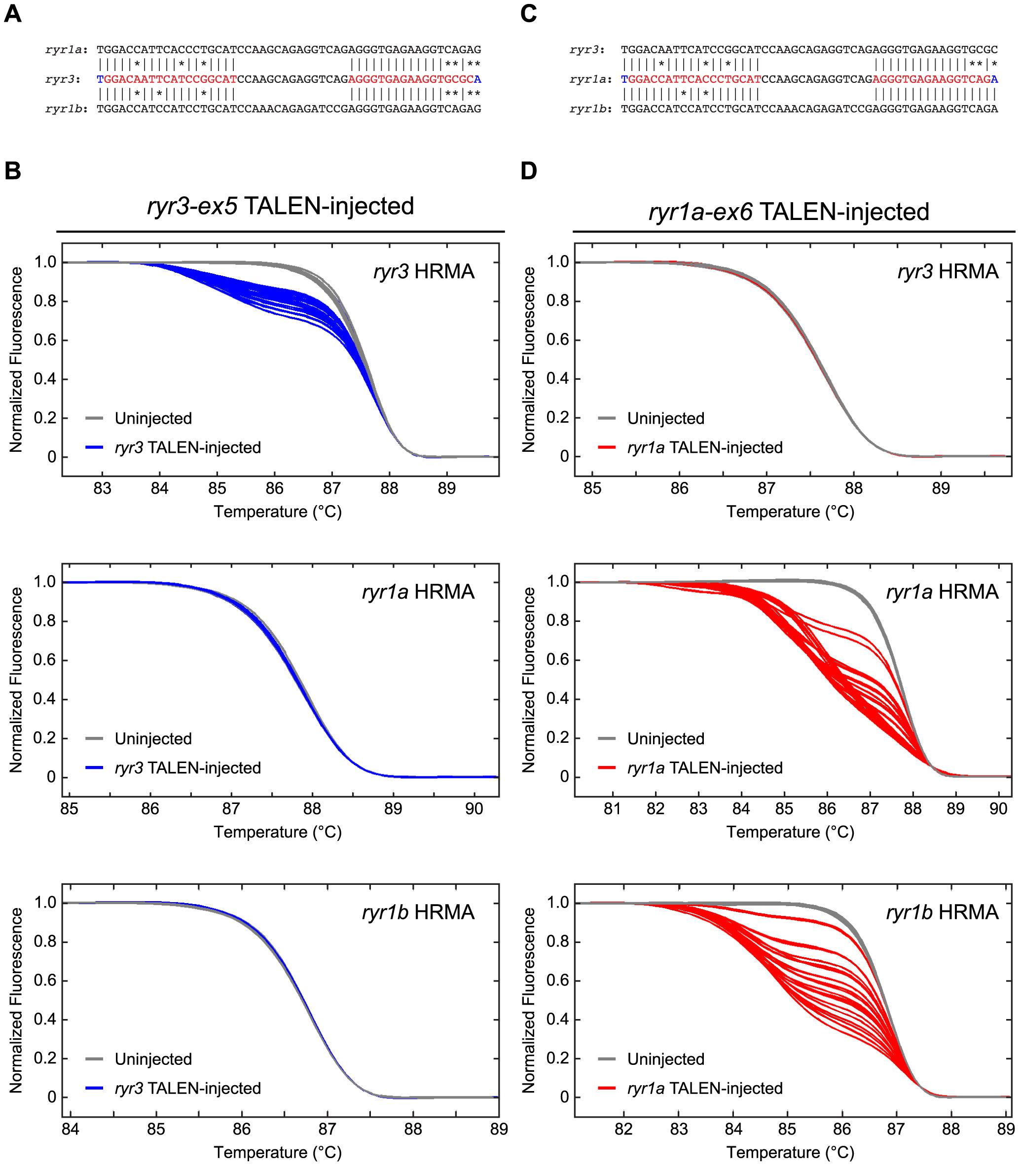 TALEN activity at homologous target sequences.