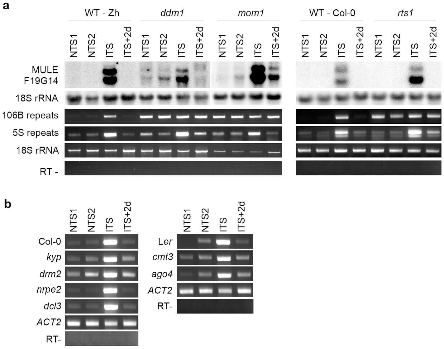 Impact of mutations in epigenetic regulators on ITS-induced transcriptional switches.