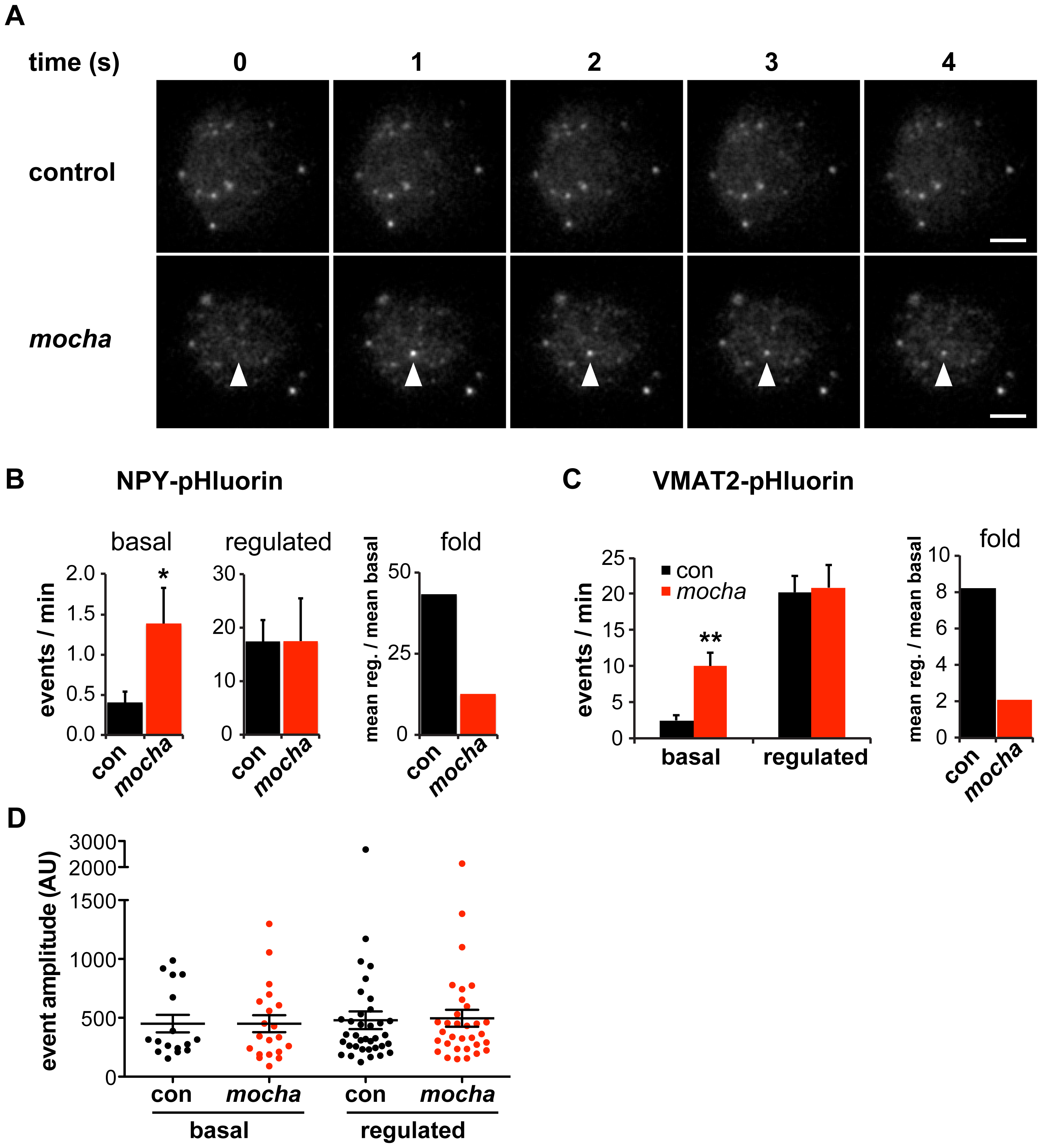 <i>mocha</i> chromaffin cells display dysregulated release of NPY and VMAT2.