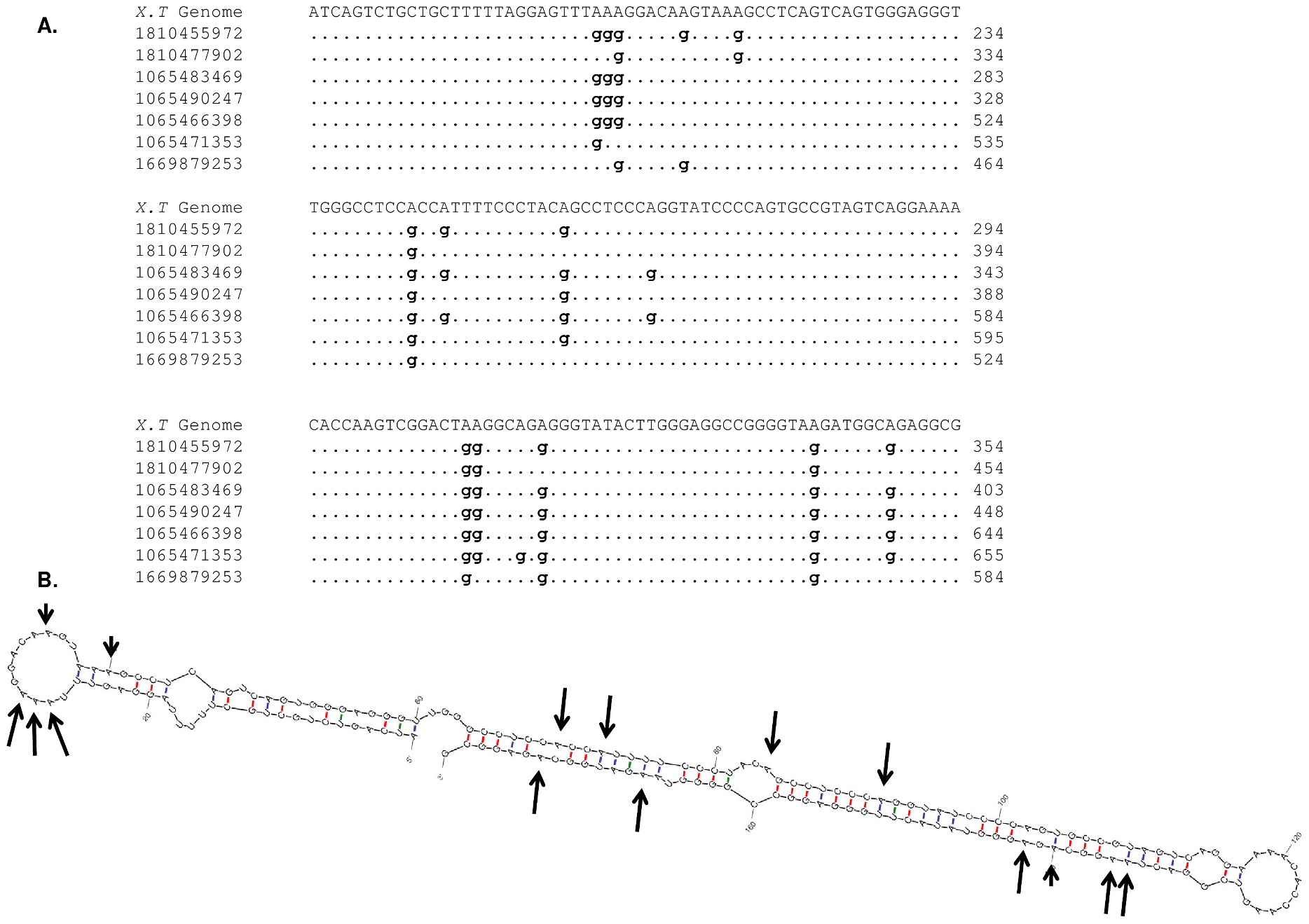 RNA editing in <i>Xenopus tropicalis</i>.