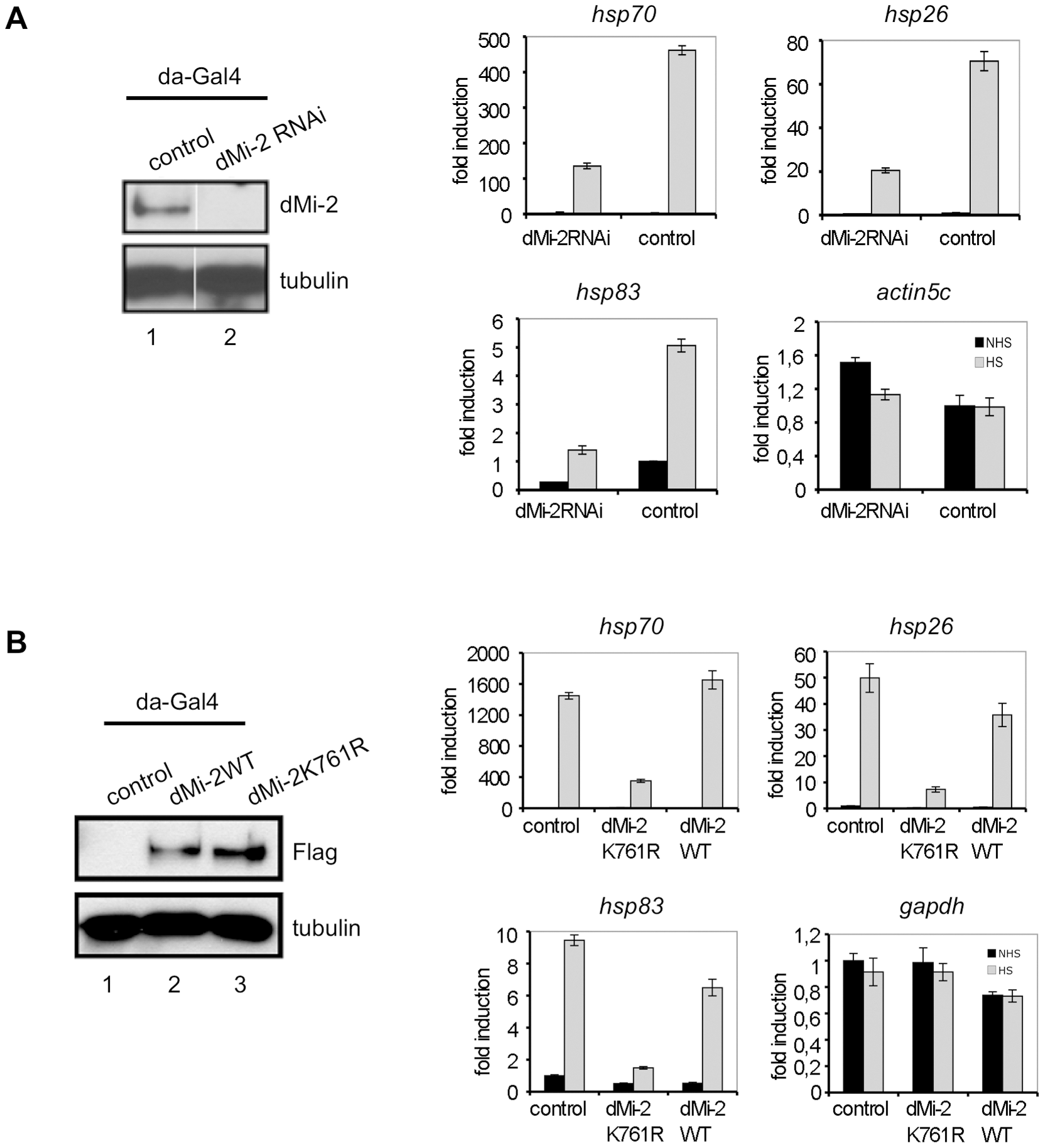 dMi-2 is required for efficient HS gene transcription.