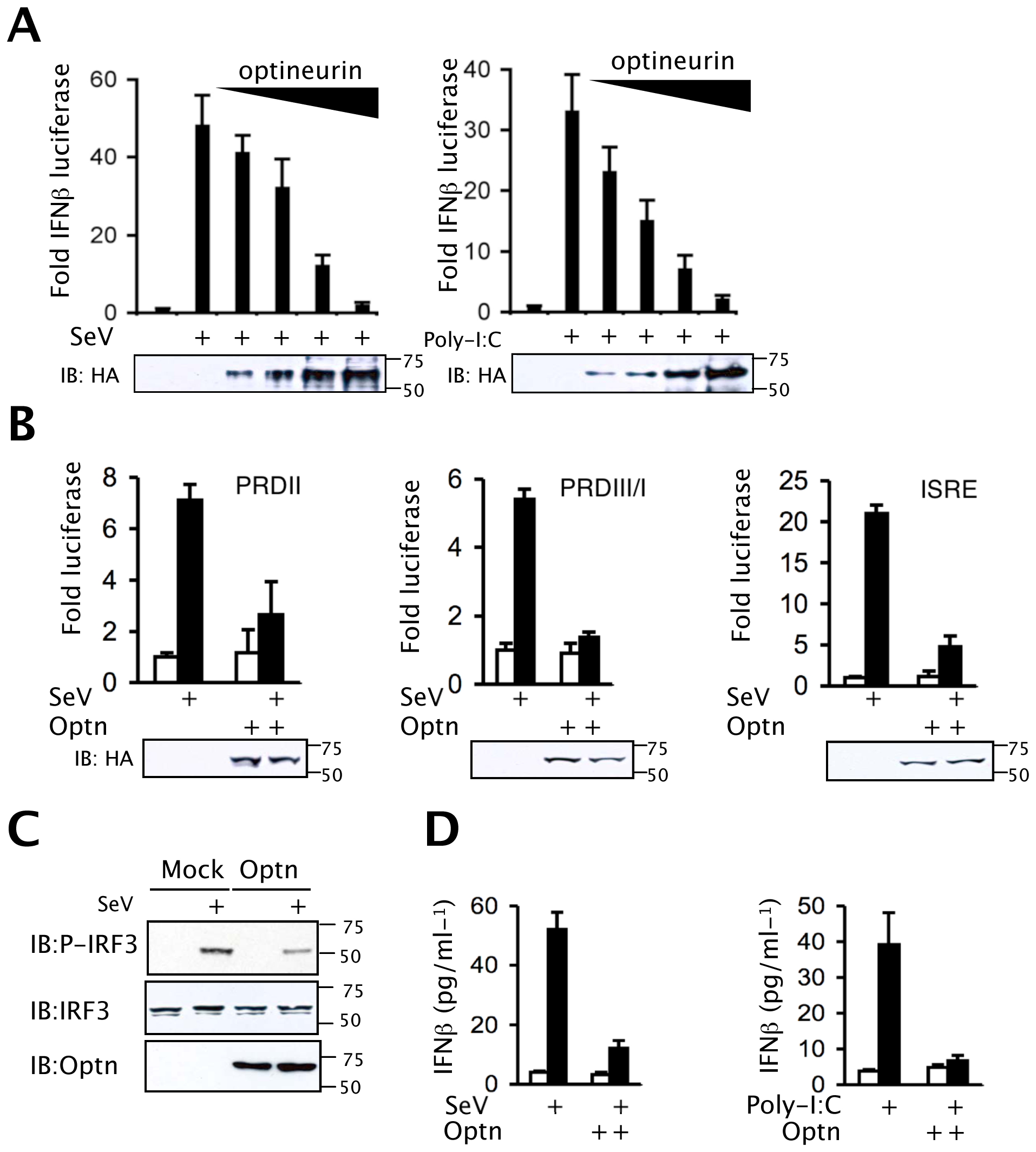 Optineurin inhibits TLR and RLH induction of IFNβ.