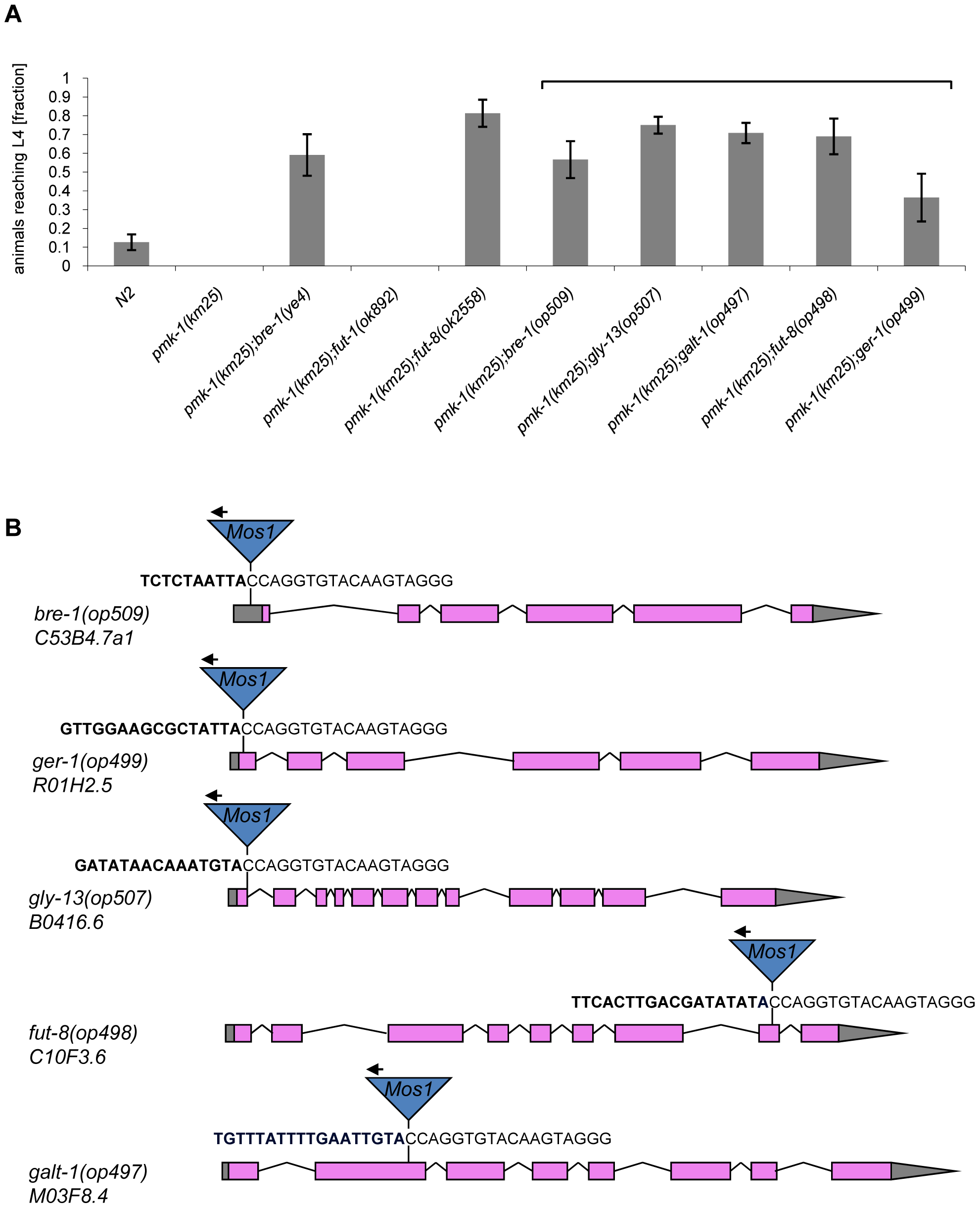 Results of the forward genetic screen for CGL2-resistant <i>C. elegans</i> mutants.