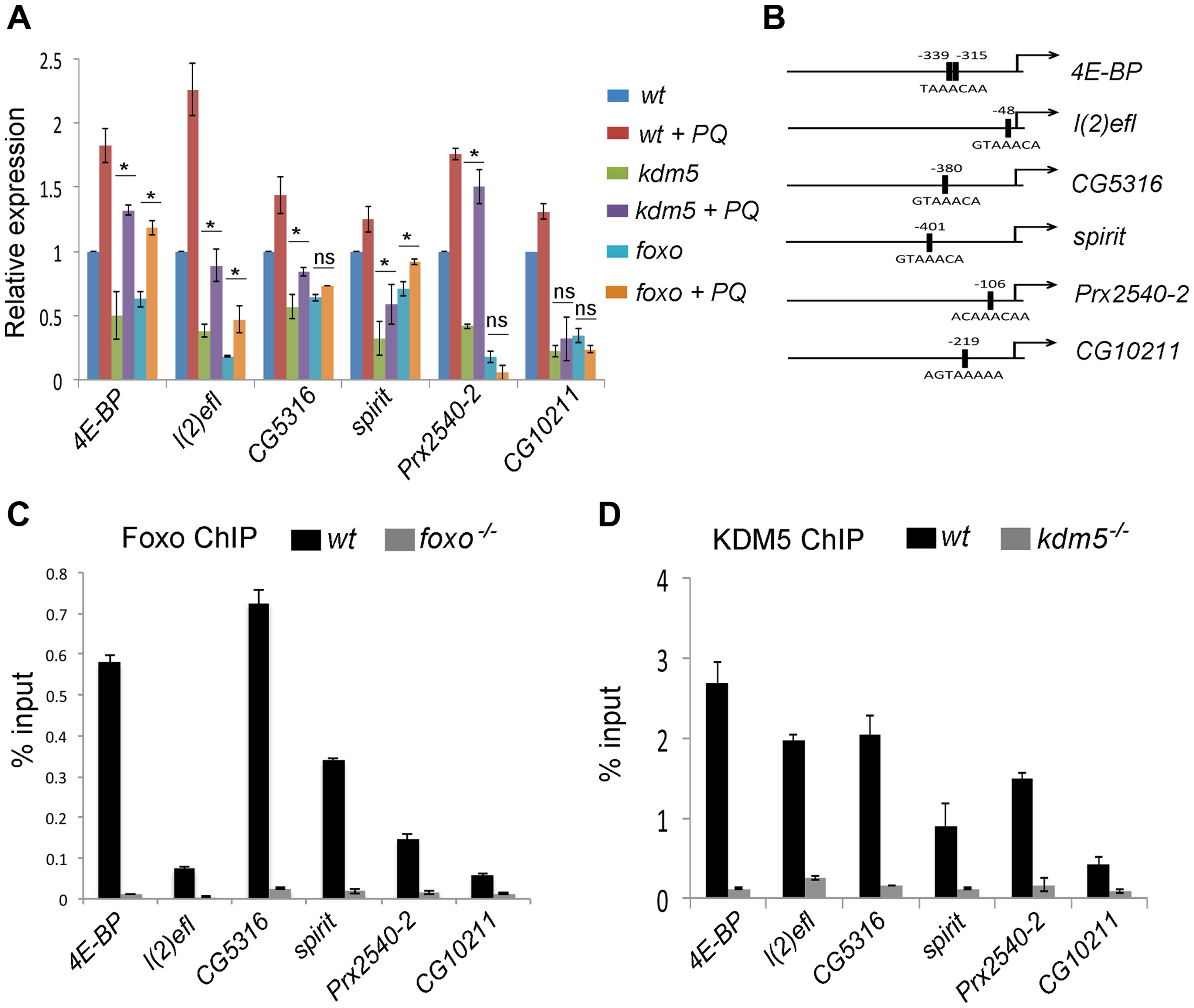 KDM5 directly regulates oxidative stress resistance genes.