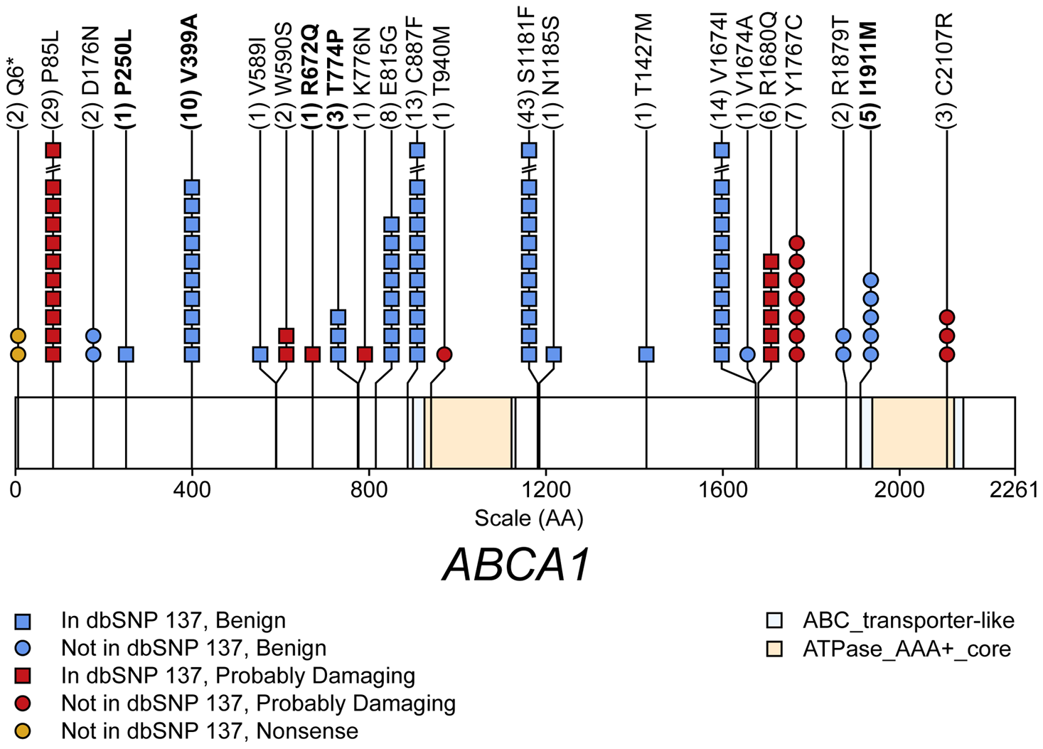 Schematic of rare (MAF&lt;1%) non-synonymous variants used in the gene-level test of total cholesterol (TC) in gene <i>ABCA1</i>.