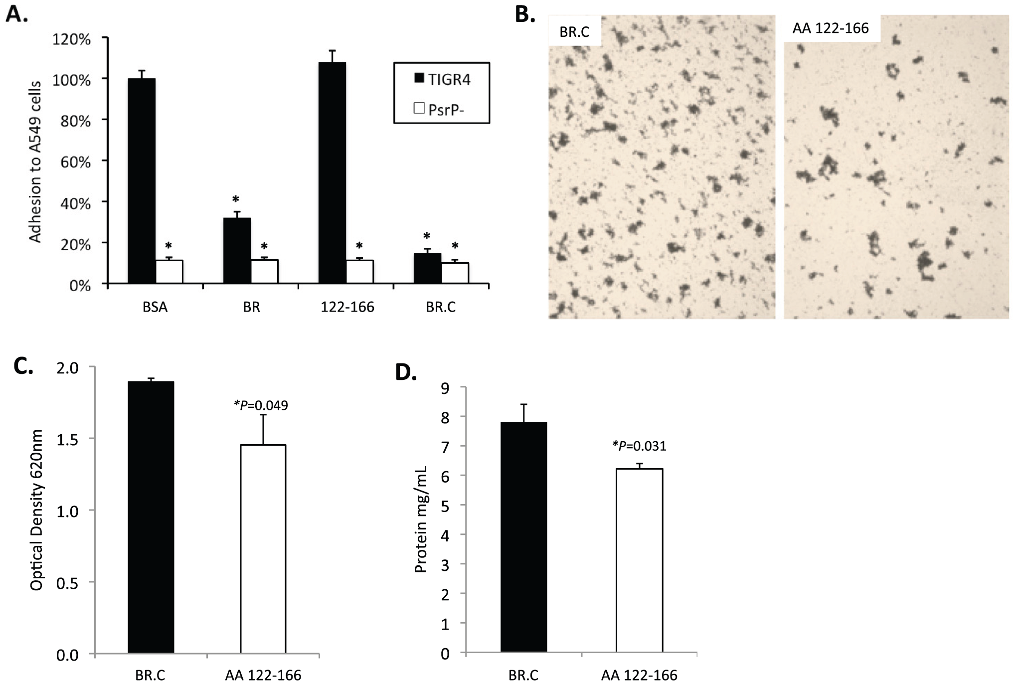 Incubation of bacteria with AA 122–166 impairs bacterial aggregation but not adhesion to cells.