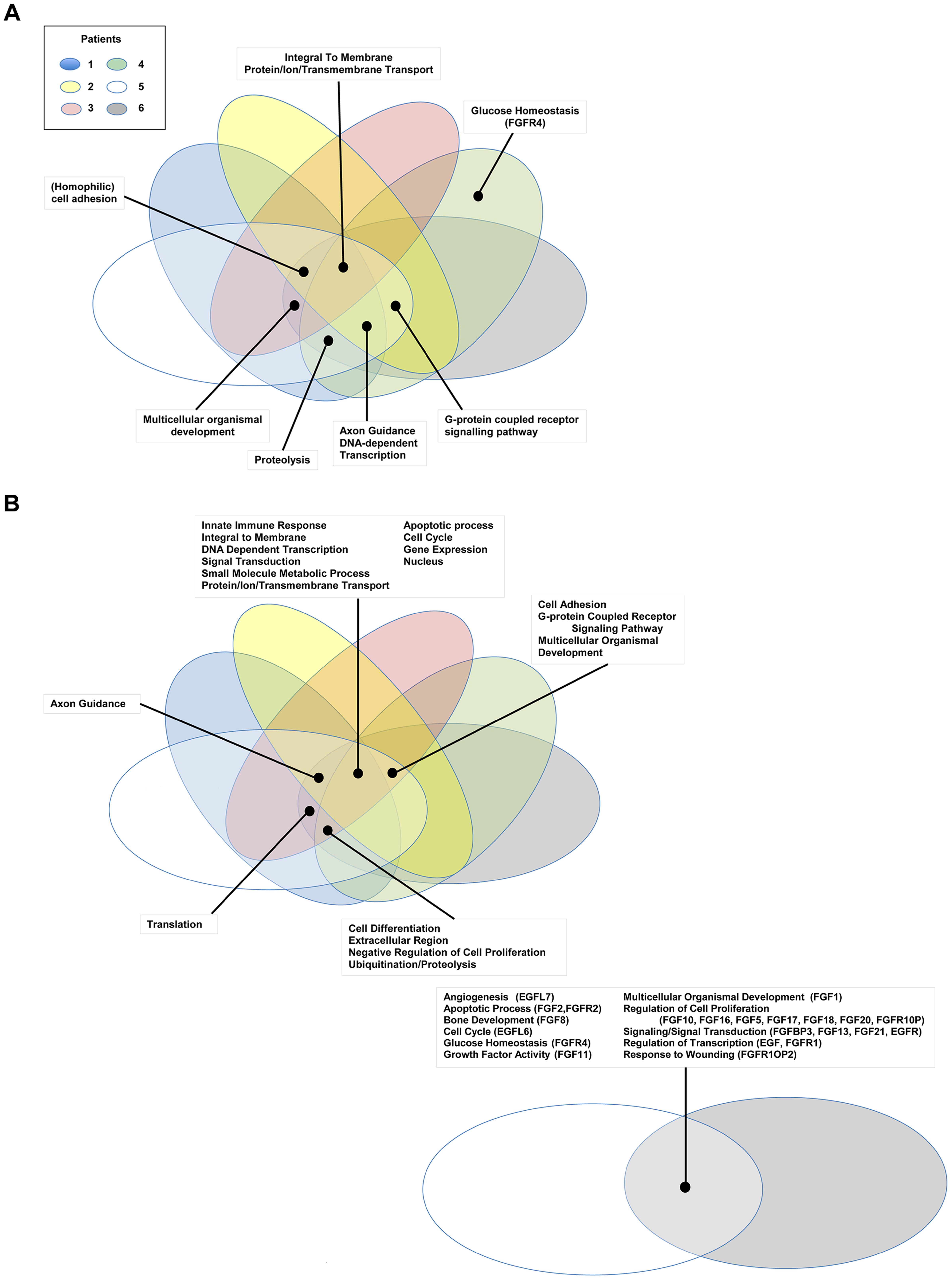 Gene Ontology pathway analysis.