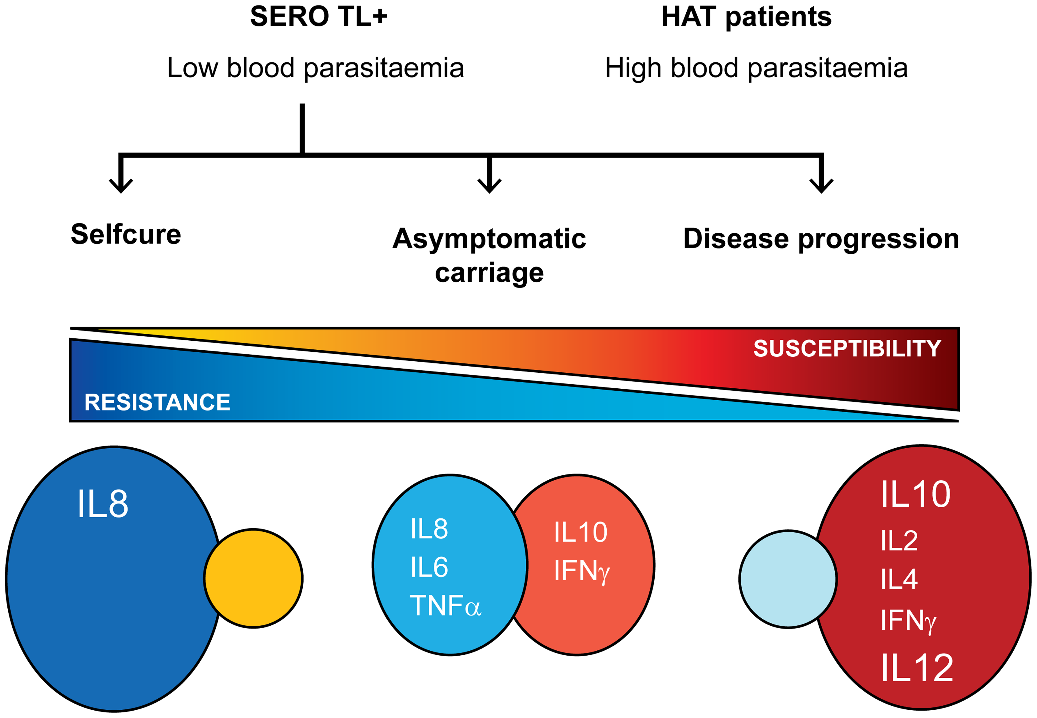 Cytokine profiles and infection outcomes in gambiense HAT.