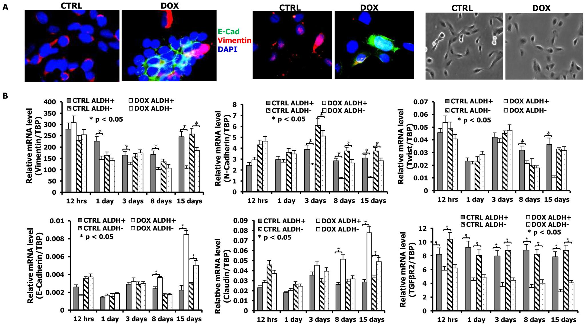 mir-93 initiates MET in SUM159 cells.