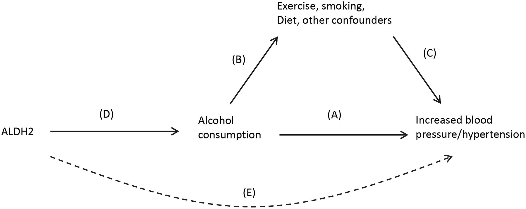 Causal pathway indicating how ALDH2 is an unconfounded marker (or instrument) of alcohol consumption in the association between alcohol and blood pressure.
