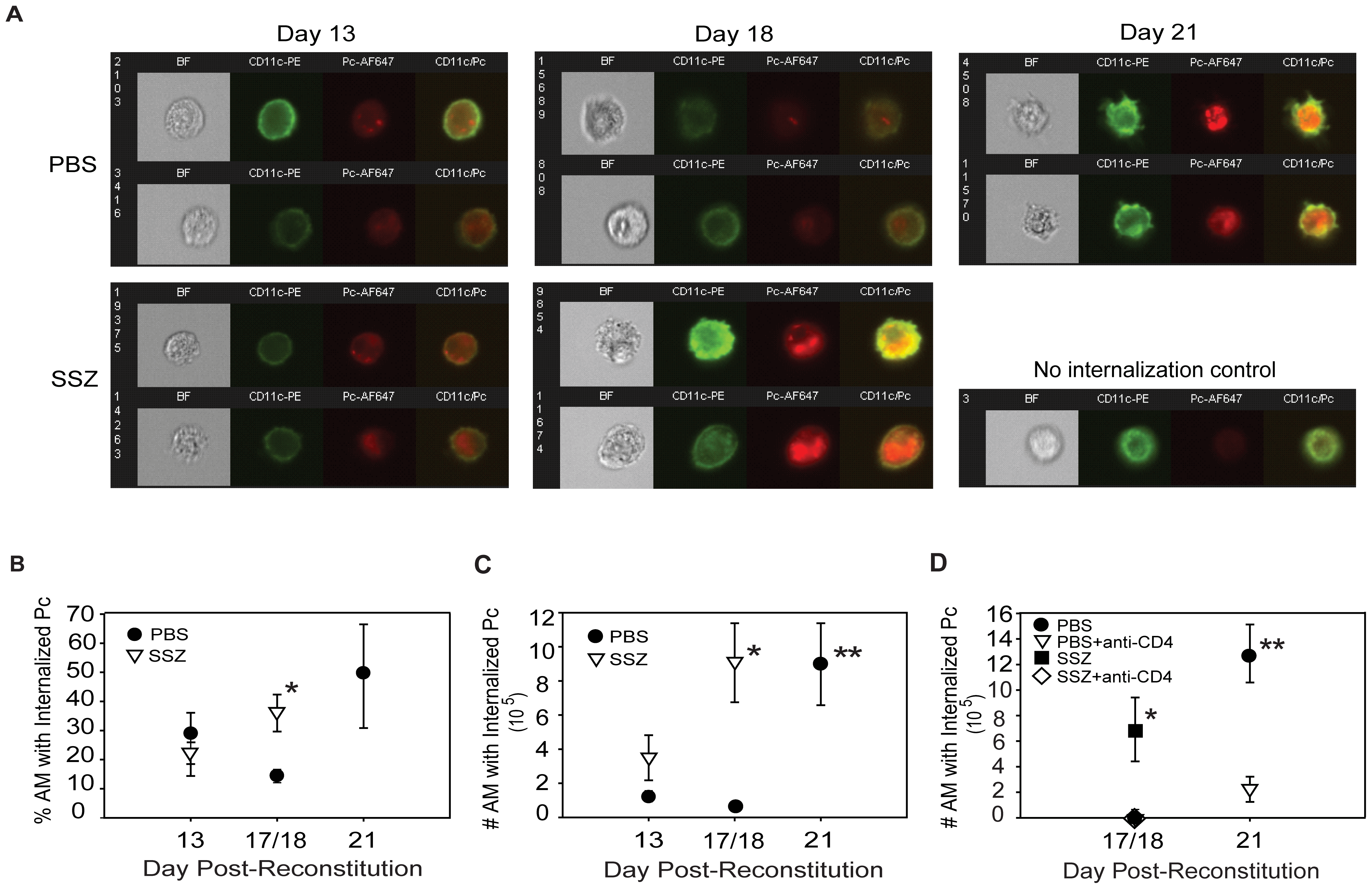 SSZ enhances CD4+ T cell-dependent AM phagocytosis of Pc.