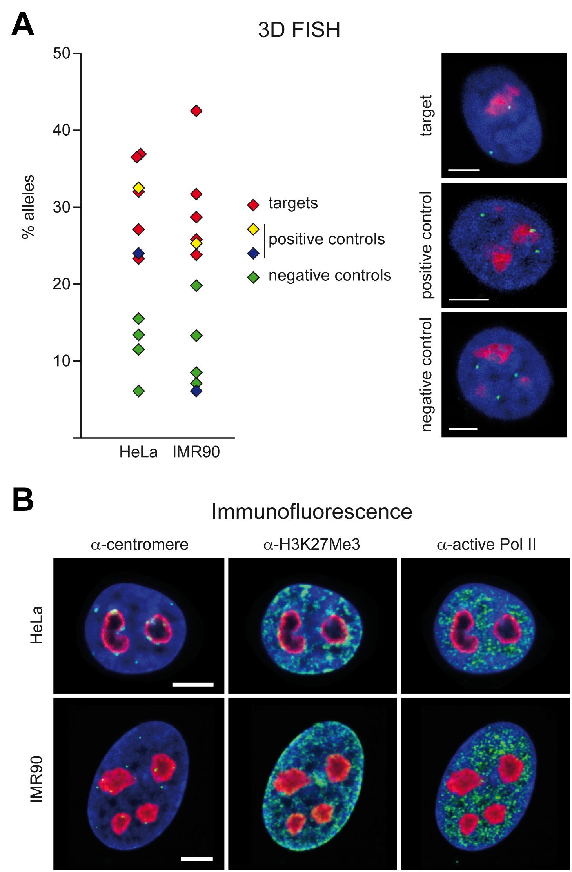 3D immuno–FISH analysis of nucleolus-associated chromatin domains.