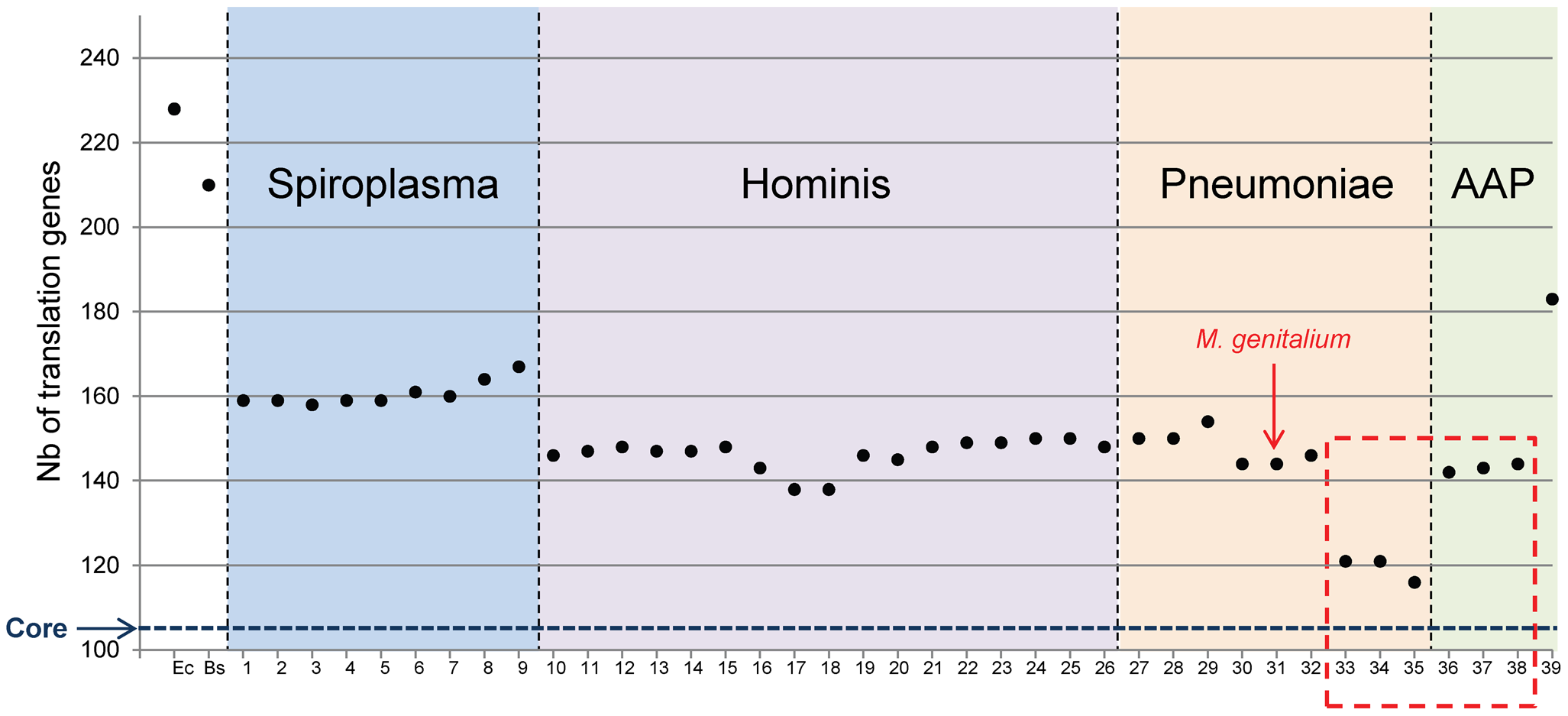 Total number of proteins involved in translation for each <i>Mollicutes</i> species.