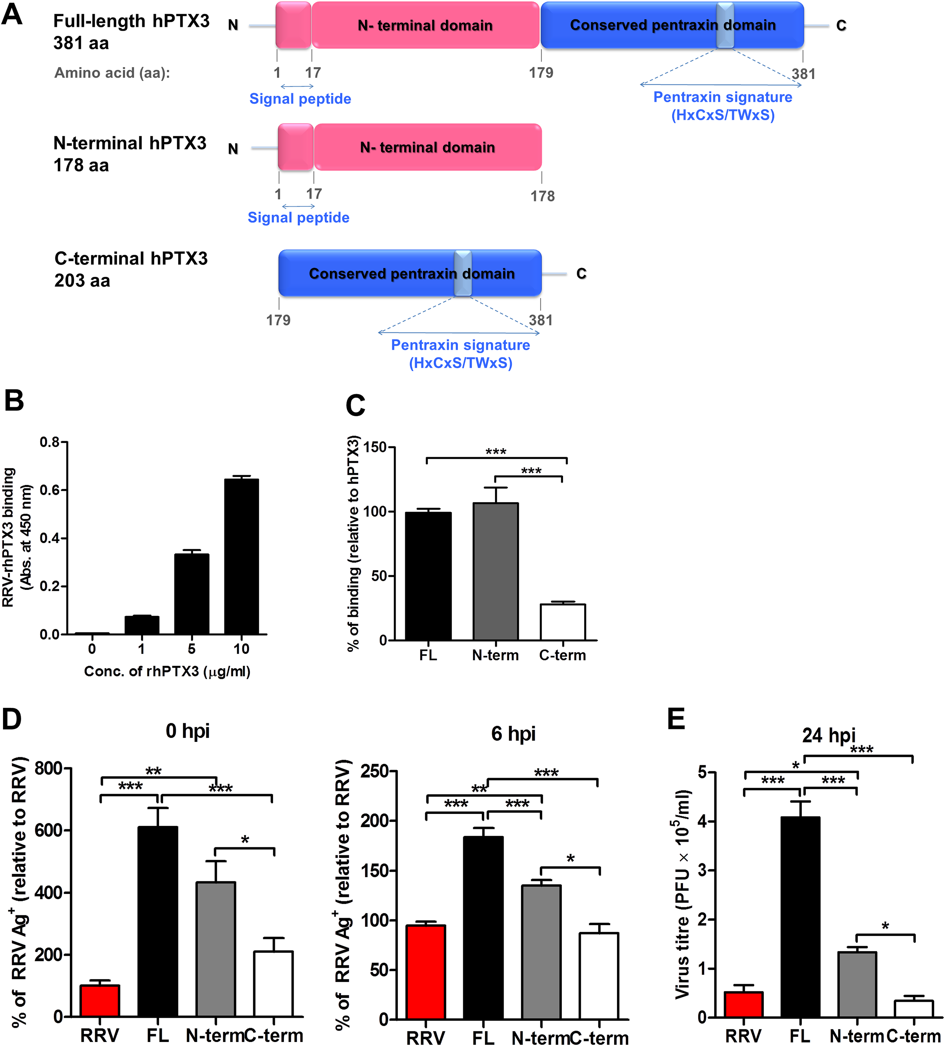 Acute phase protein MBL binds to RRV but does not affect viral infectivity.