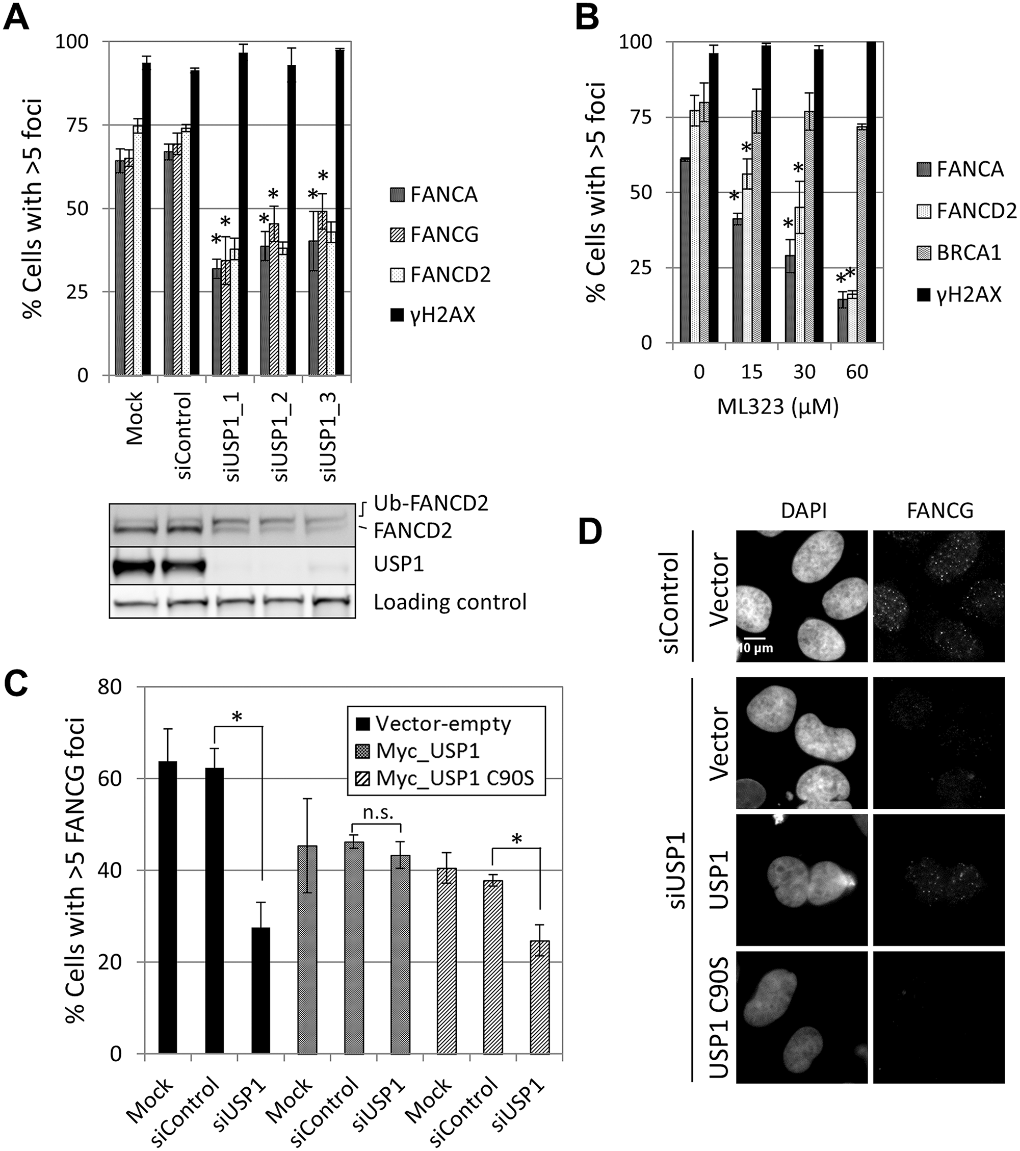 USP1 is required for FA core complex foci formation.