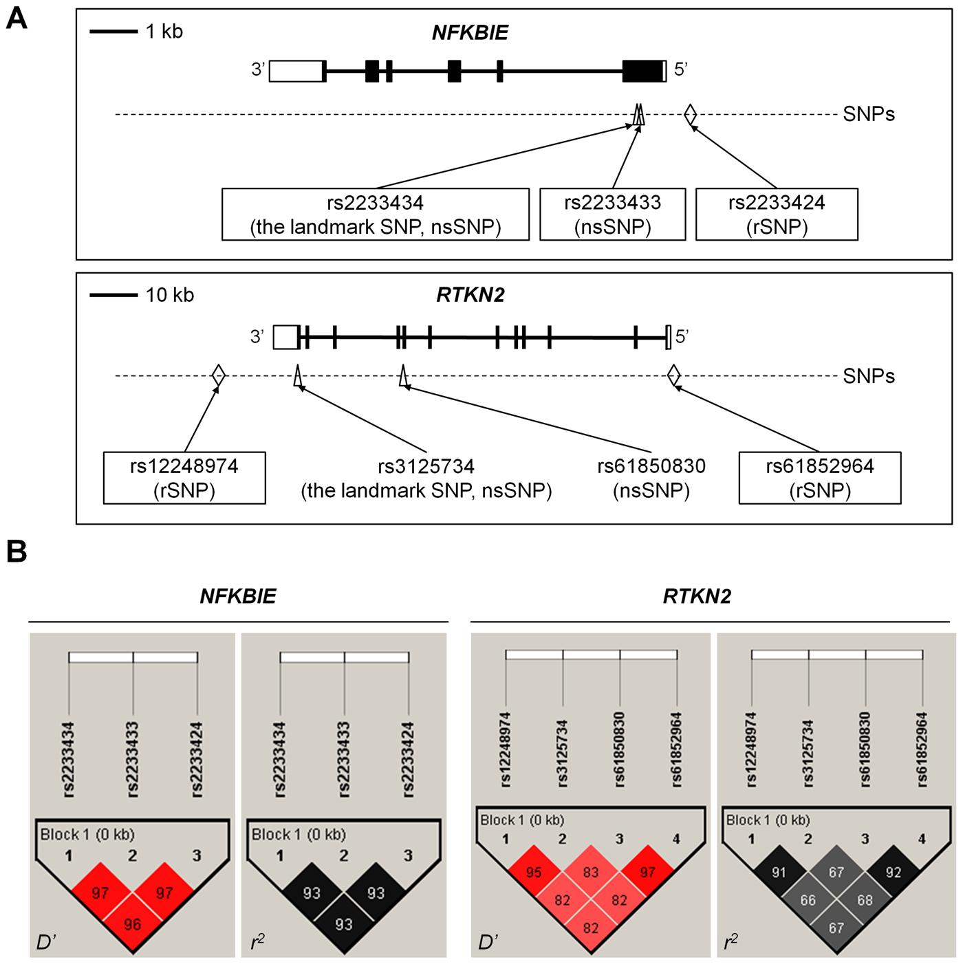 Genomic position and LD blocks.