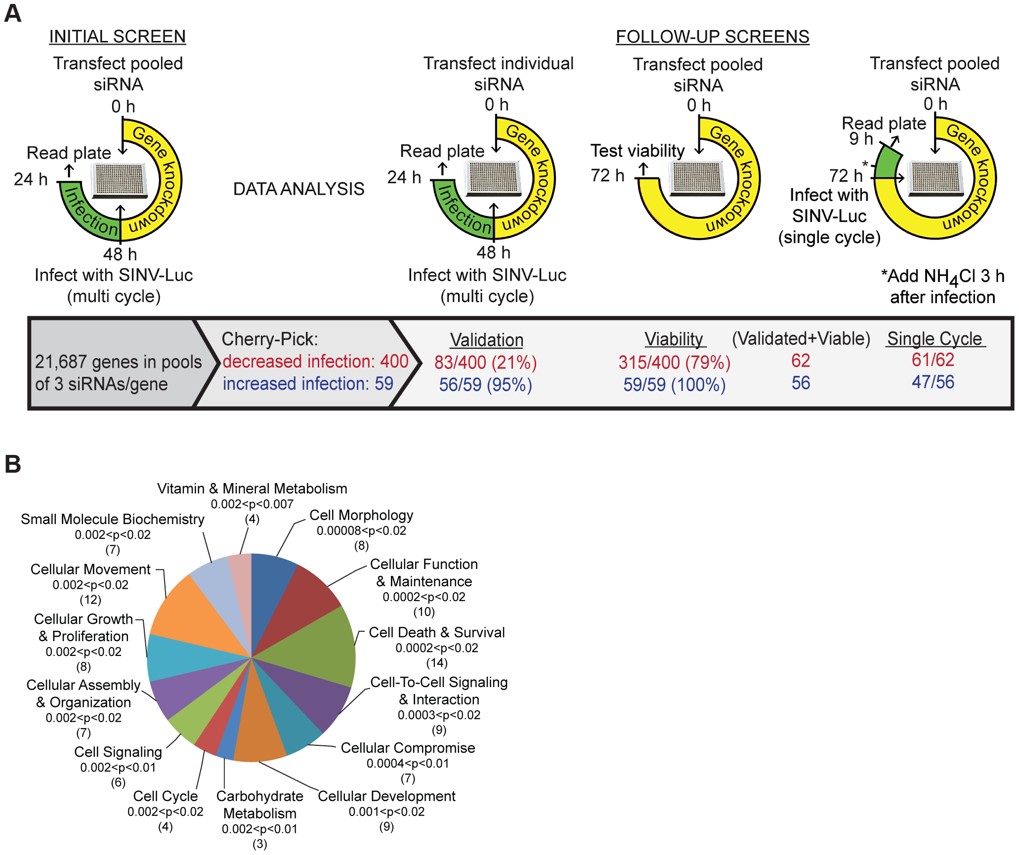 Sindbis virus genome-wide RNAi screen.