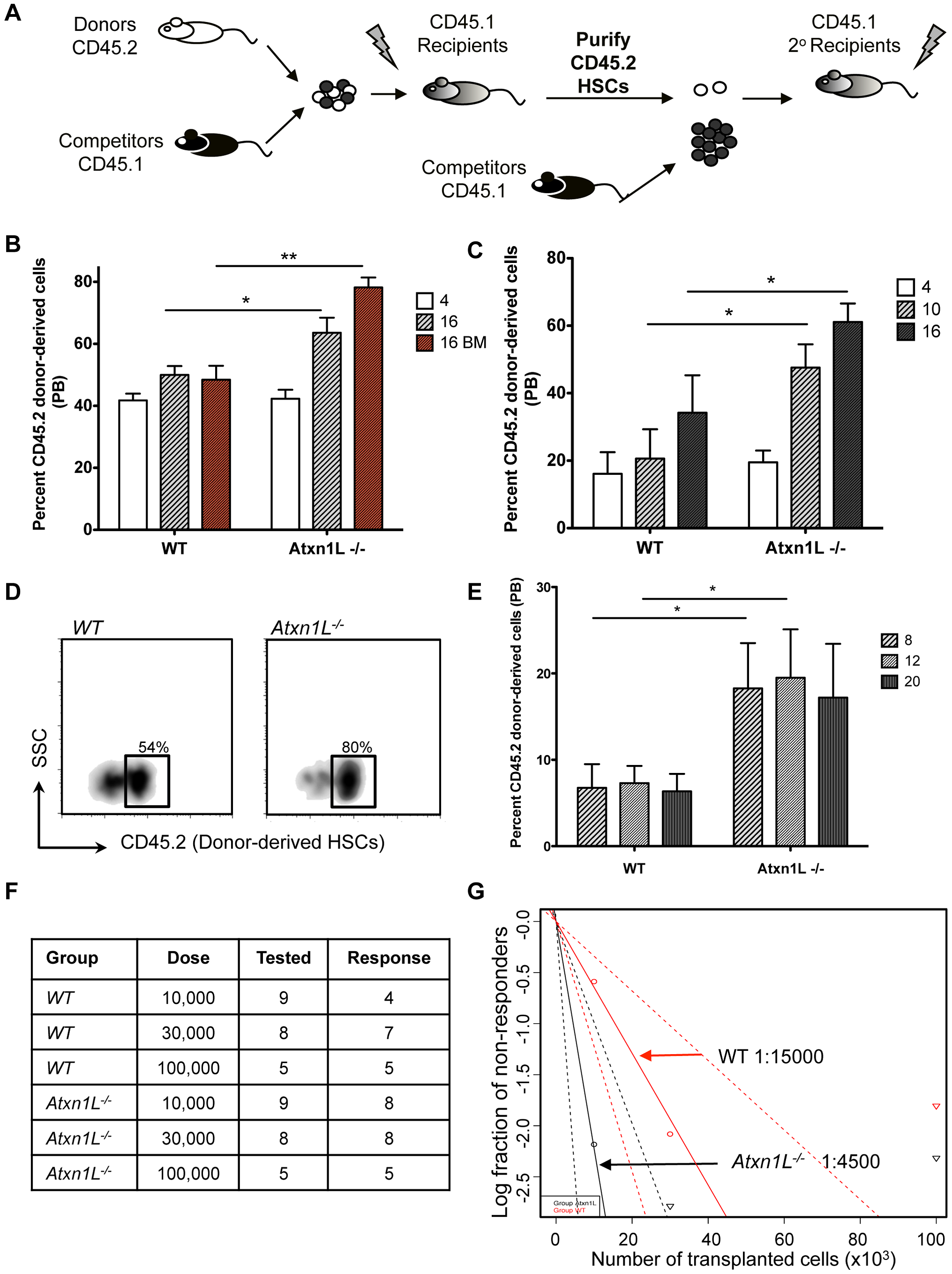 <i>Atxn1L<sup>−/−</sup></i> mice have enhanced HSC function.