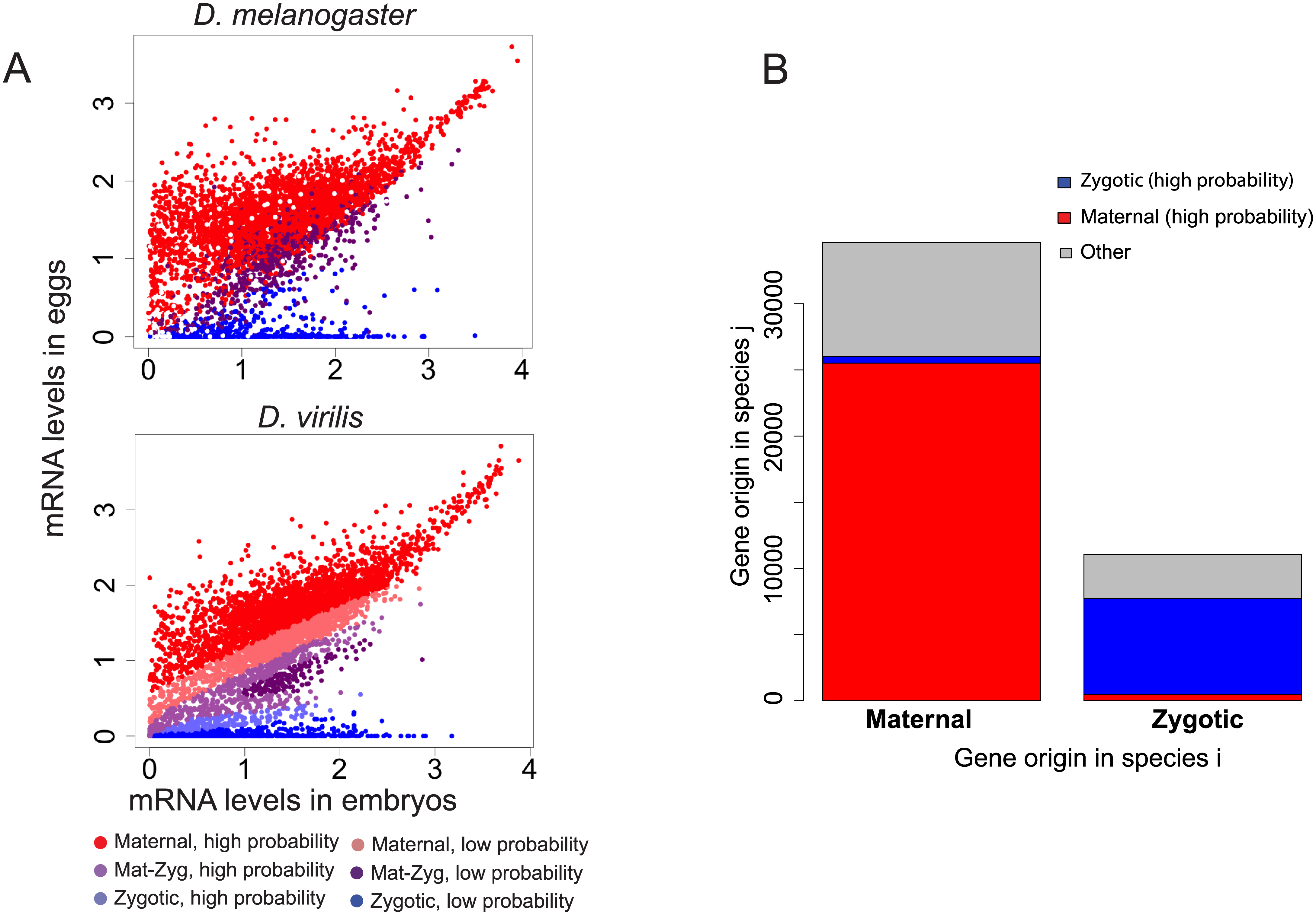 Evolution of the origin of an mRNA transcript in the embryo.