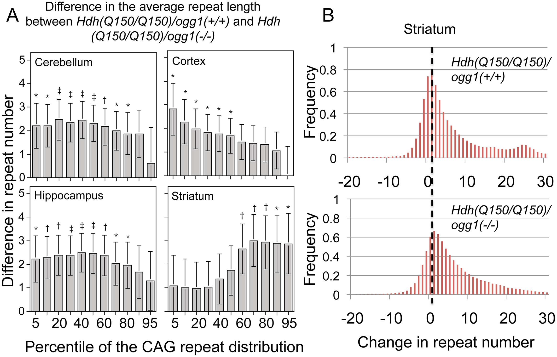 The distribution of CAG tract suppression by OGG1 is region-specific and affects tract sizes across the entire asymmetric distribution.