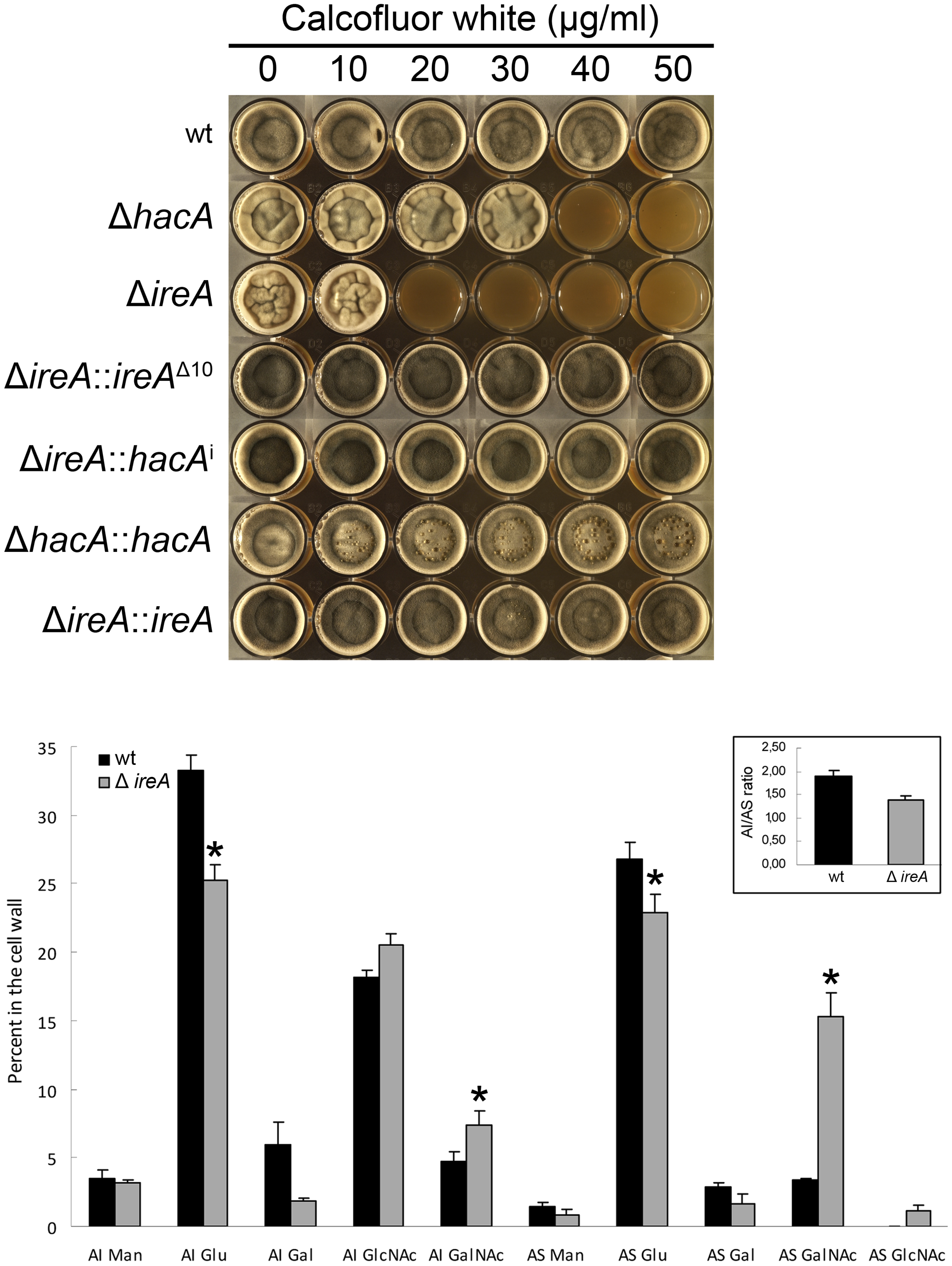 IreA contributes to cell wall homeostasis.