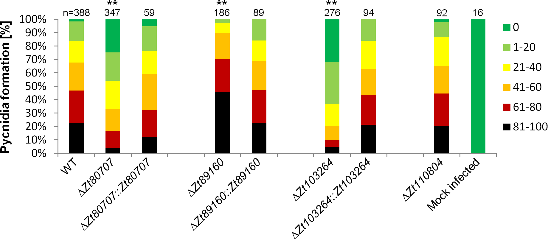 <i>In planta</i> phenotypic assay demonstrates impact of gene deletion in <i>Z</i>. <i>tritici</i>.