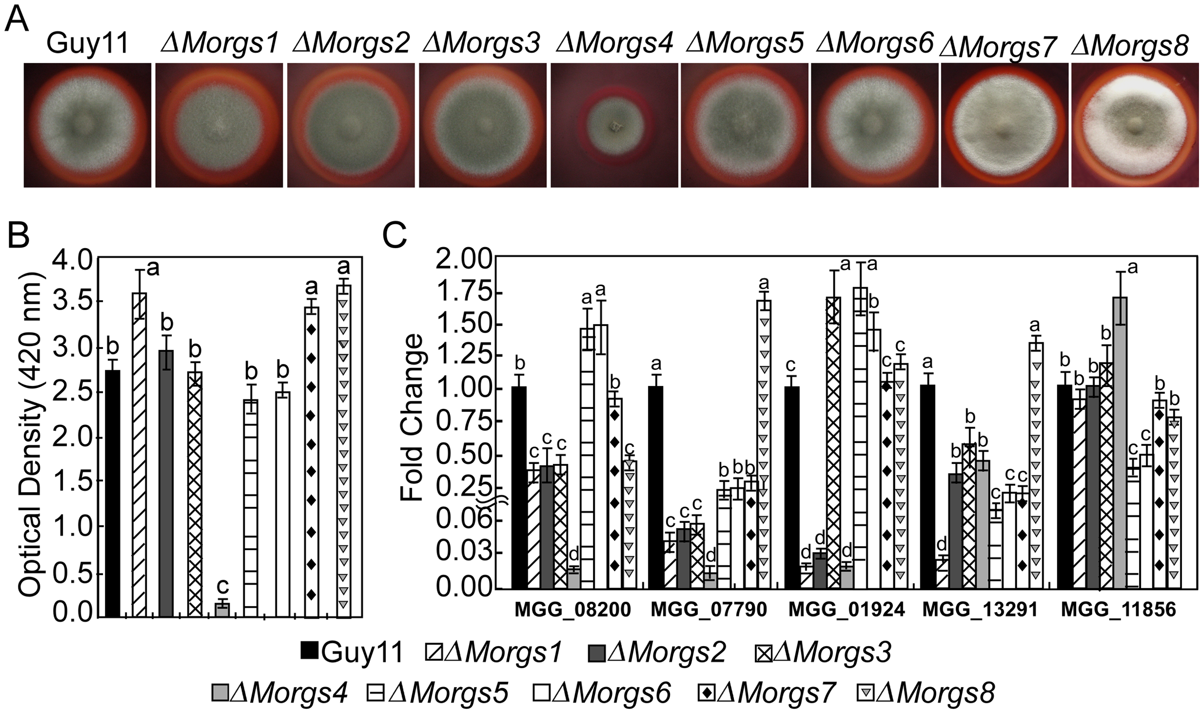 Measurement of activities of extracellular peroxidases.