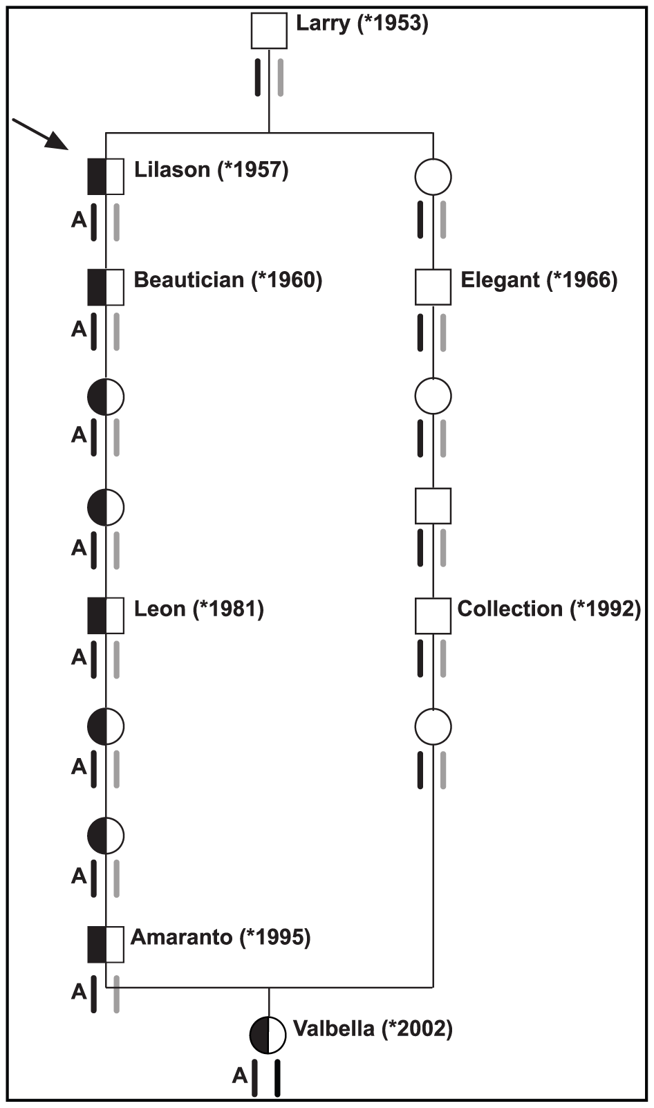Pedigree of selected inbred Brown Swiss cattle.