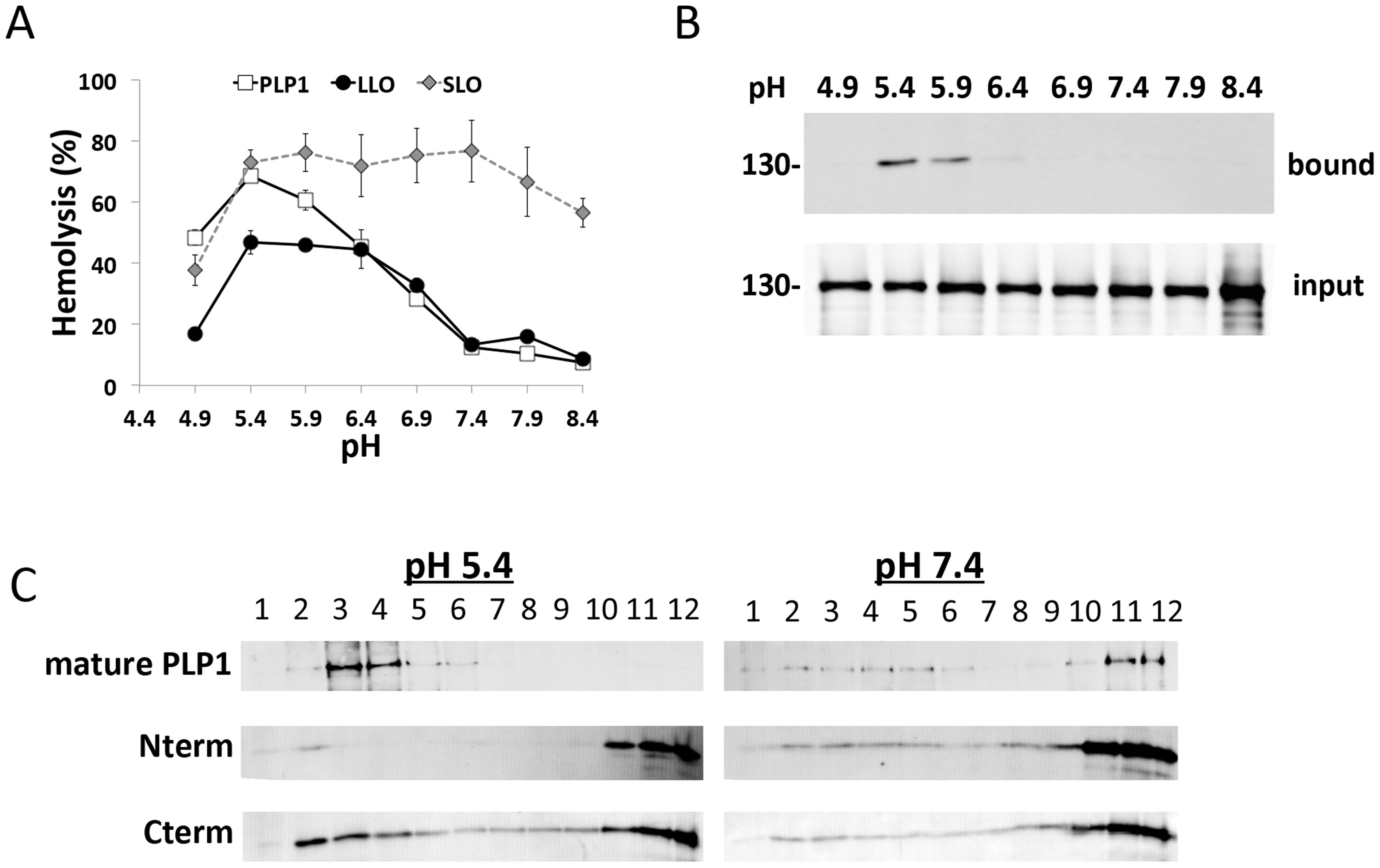 PLP1 displays pH-dependent lytic and membrane binding activity.